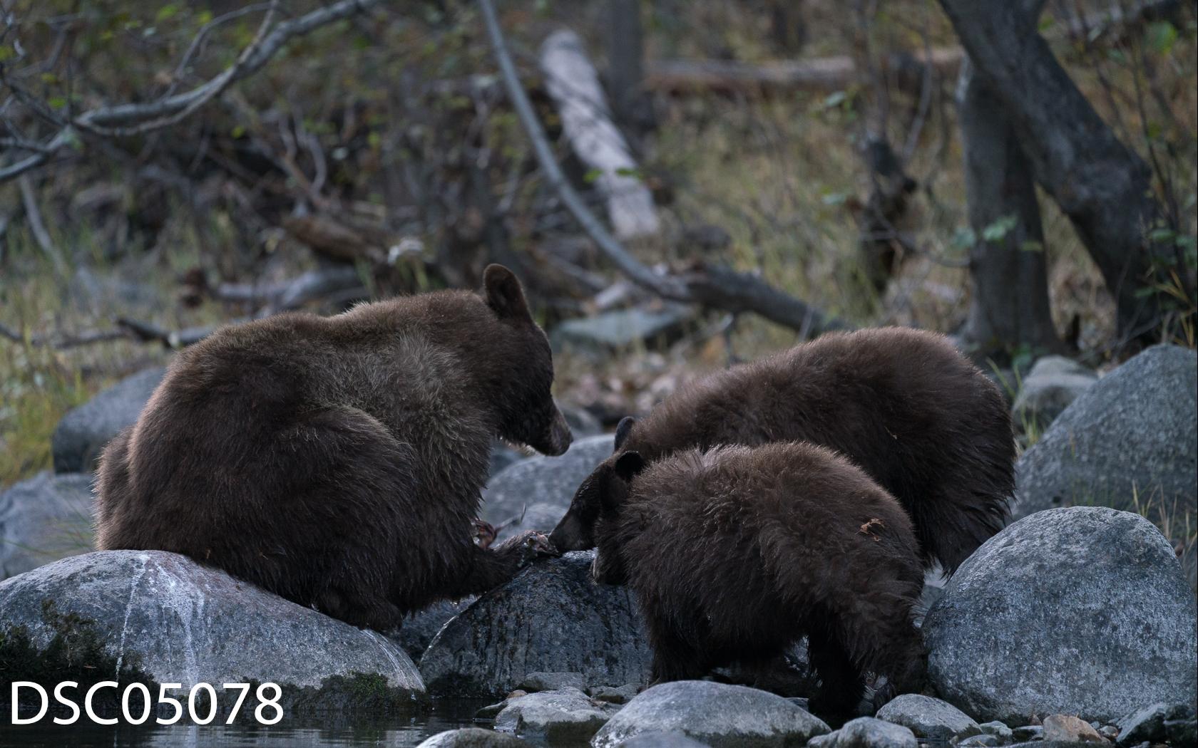 Just Bears-109.jpg