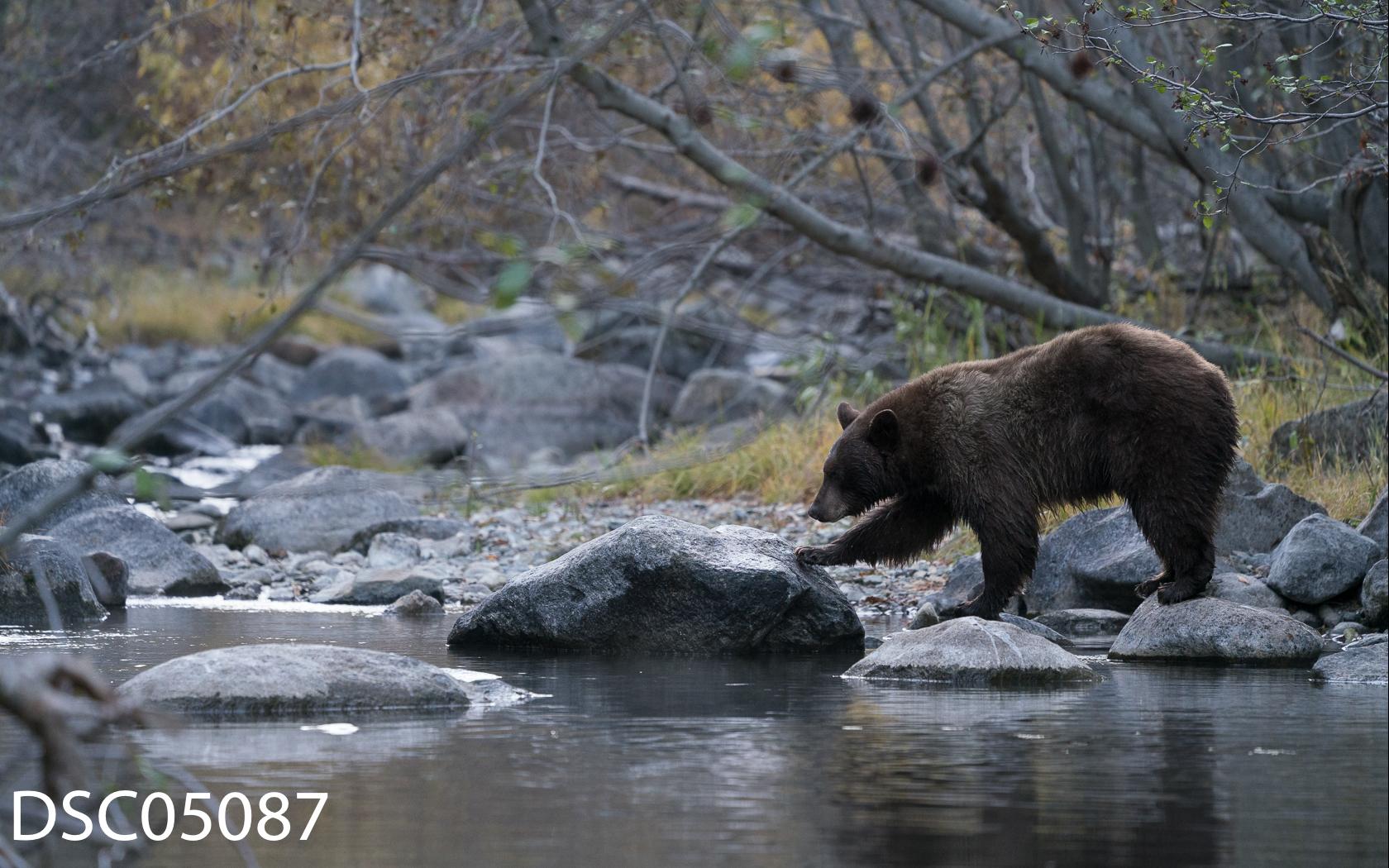 Just Bears-110.jpg