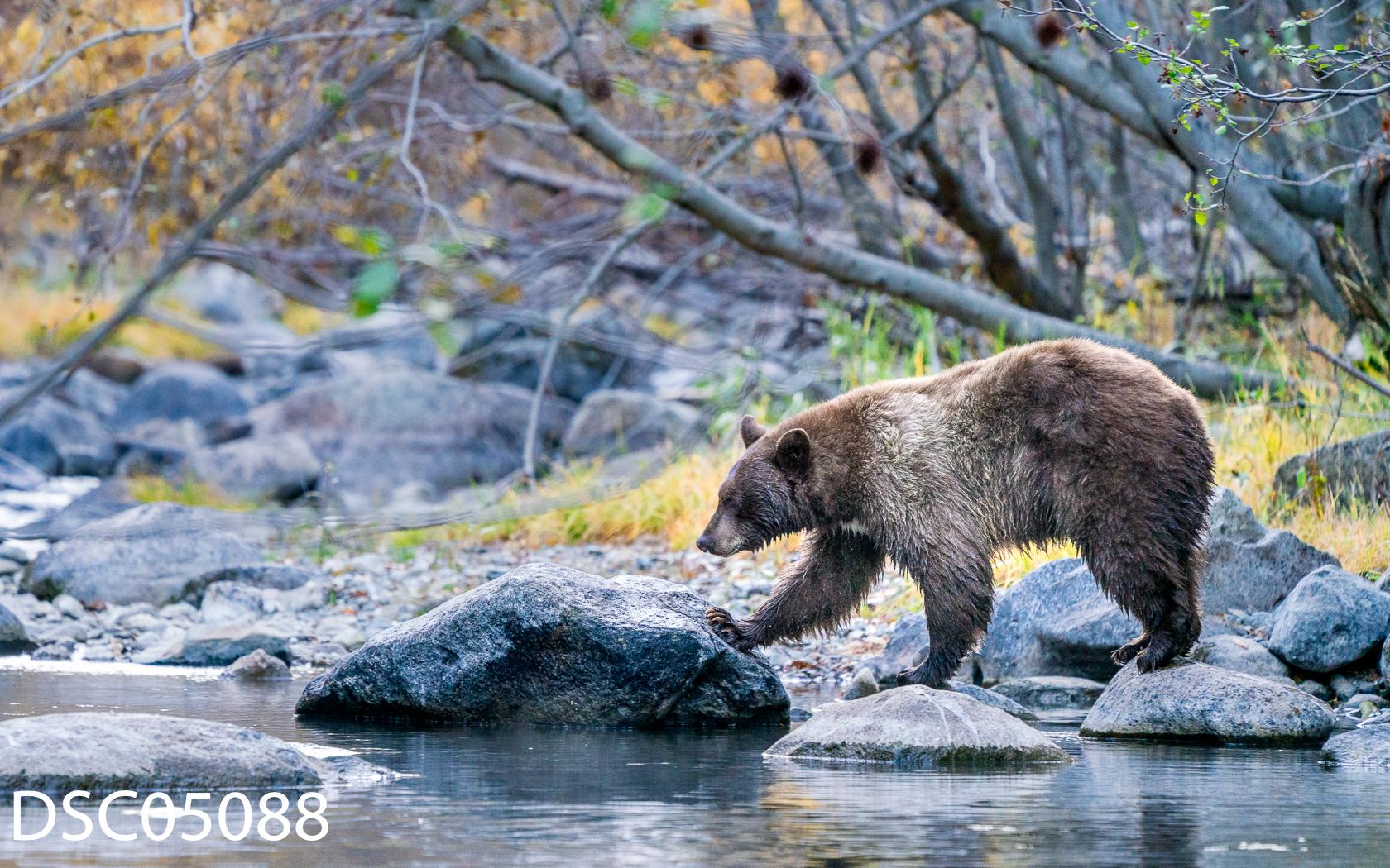 Just Bears-111.jpg
