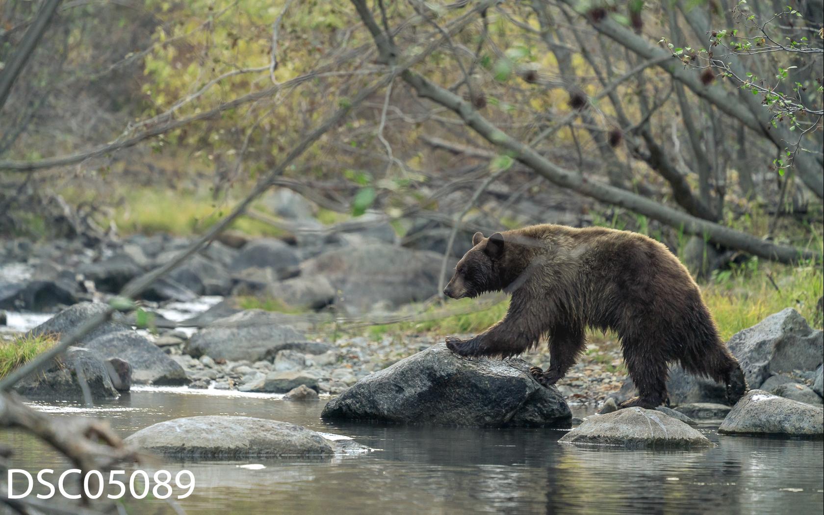 Just Bears-112.jpg