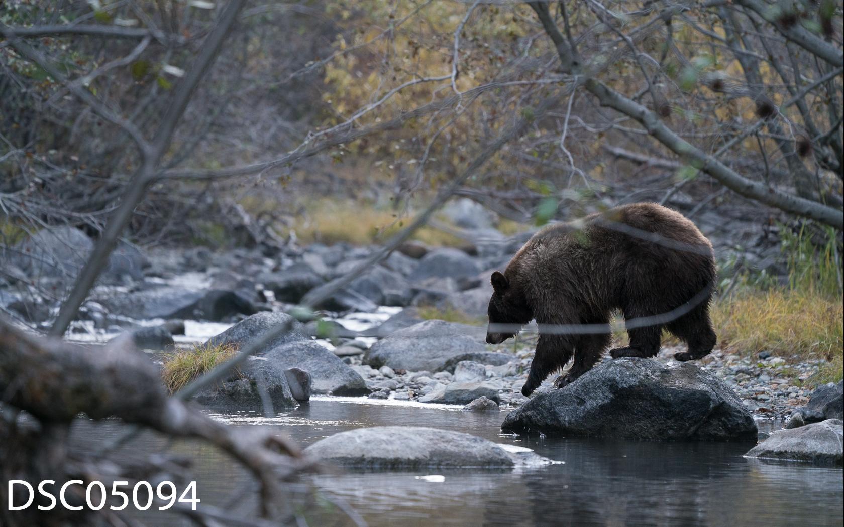 Just Bears-113.jpg
