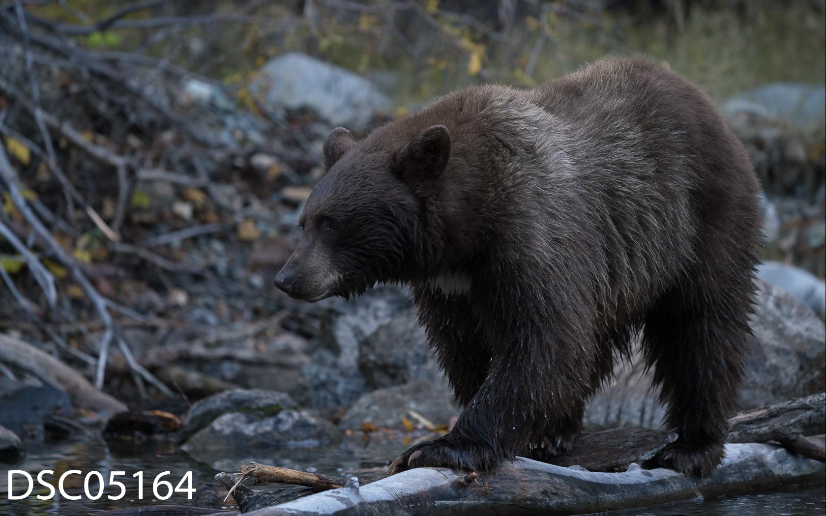 Just Bears-118.jpg