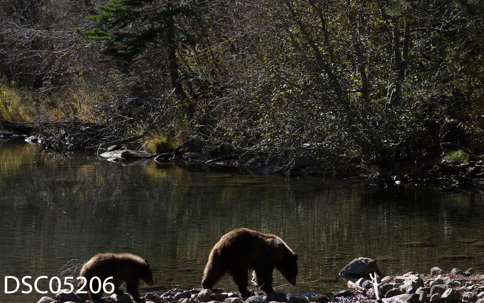 Just Bears-119.jpg