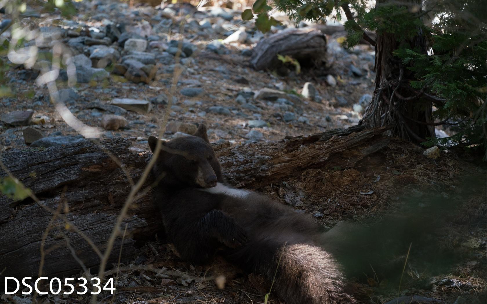 Just Bears-121.jpg
