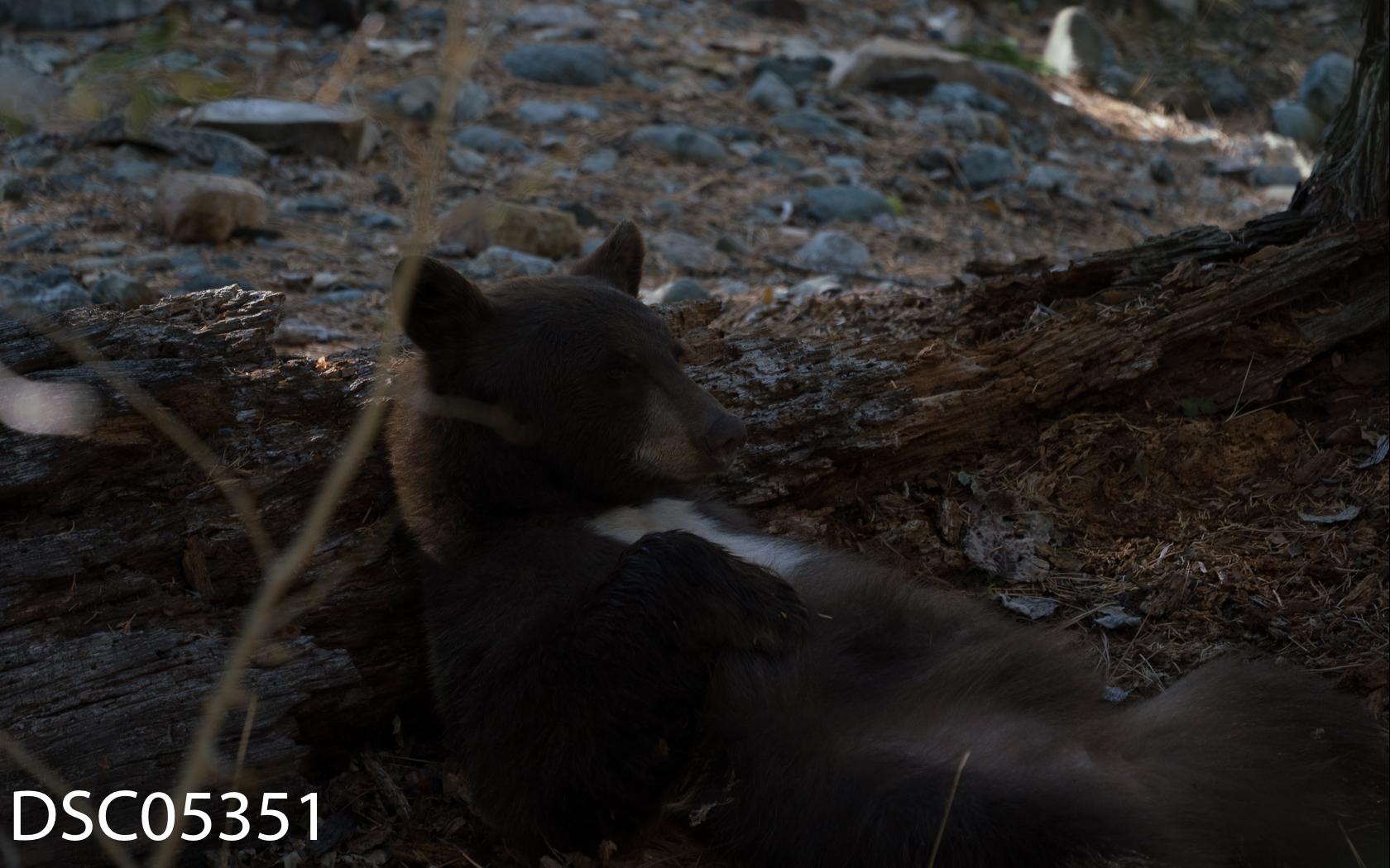 Just Bears-122.jpg