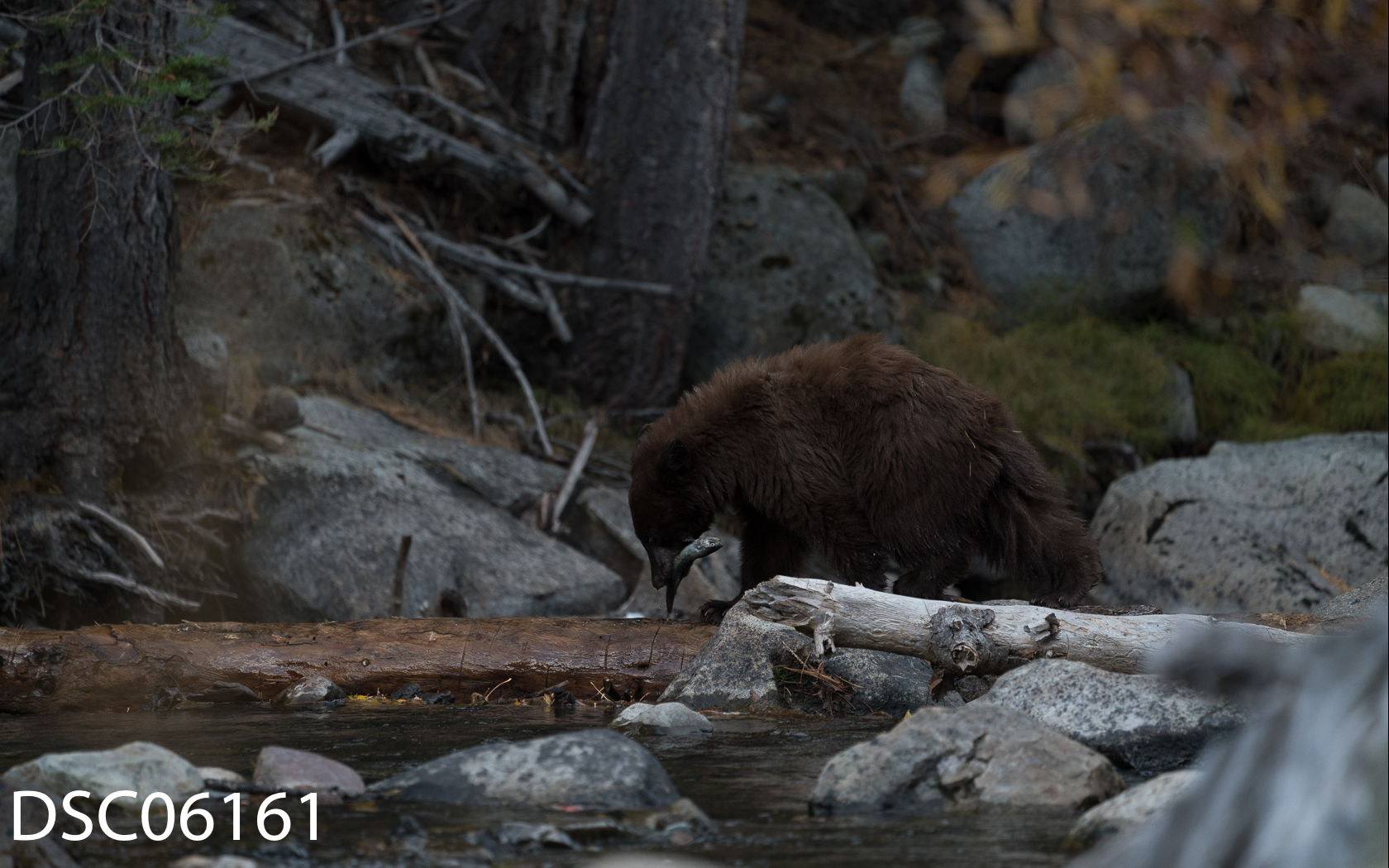 Just Bears-125.jpg