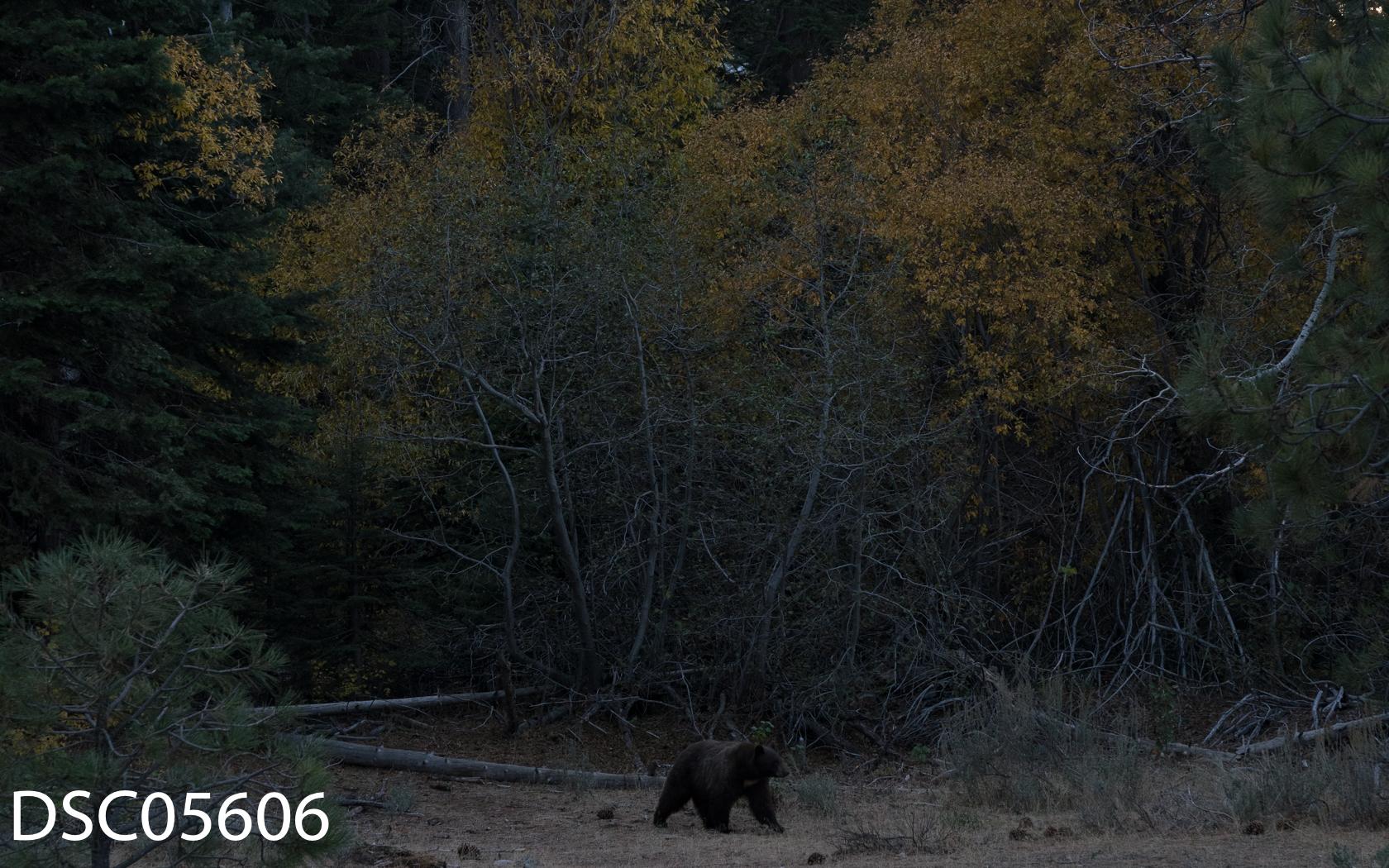 Just Bears-124.jpg