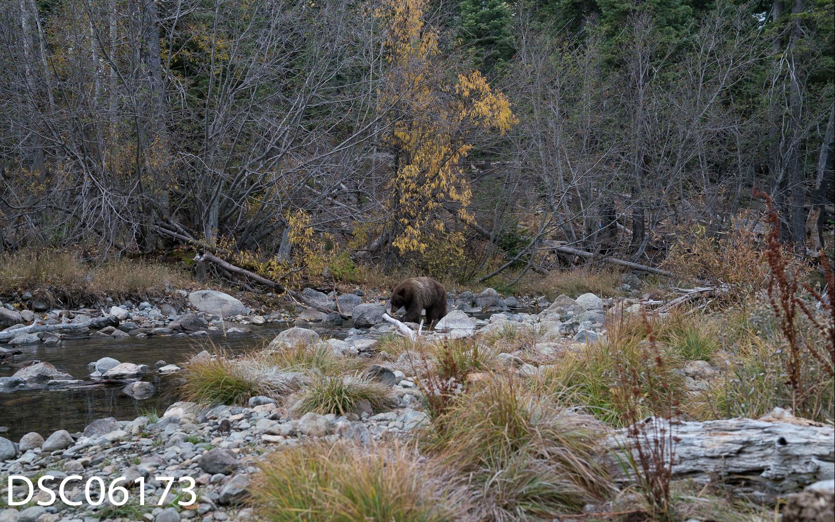 Just Bears-126.jpg