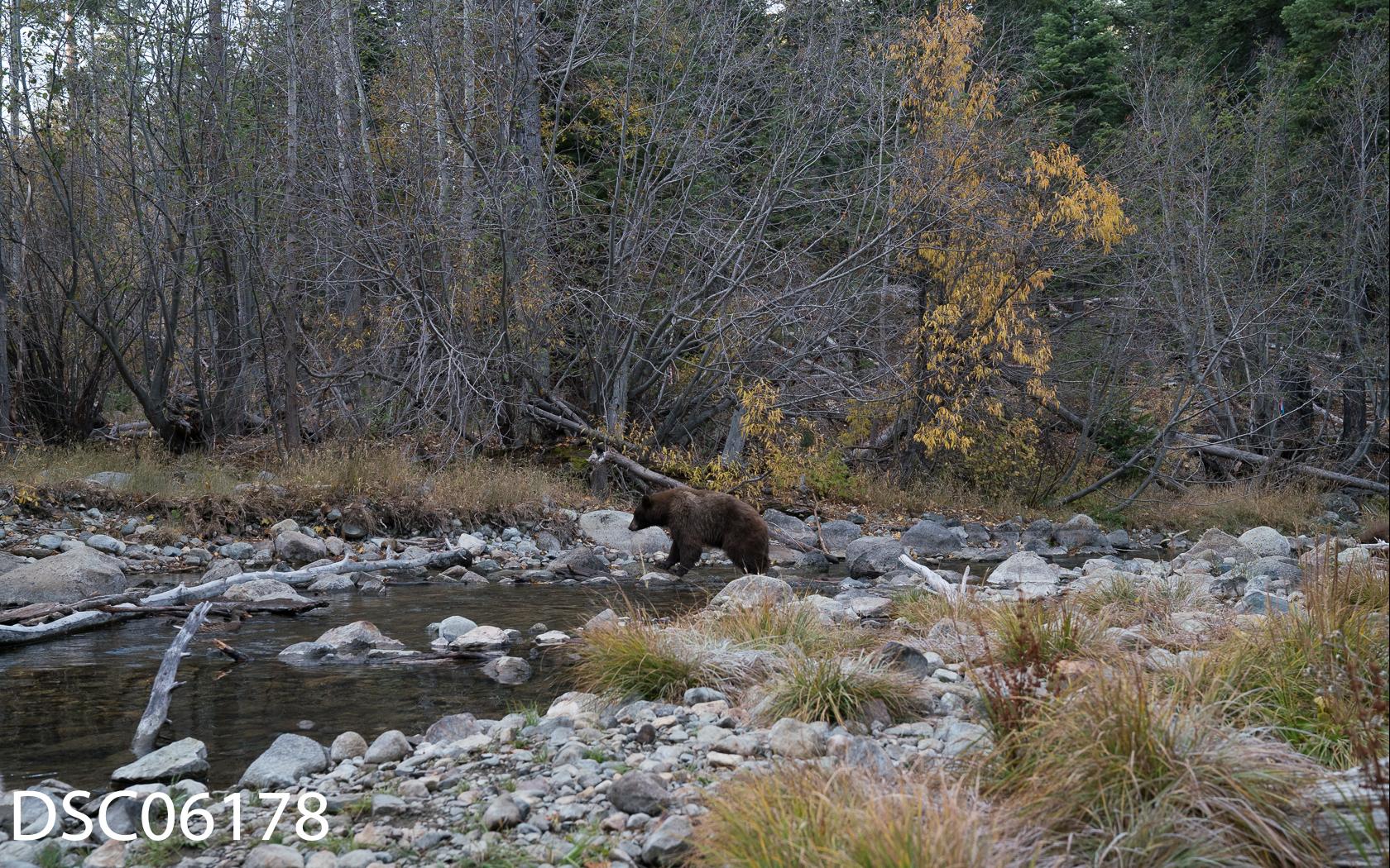 Just Bears-127.jpg