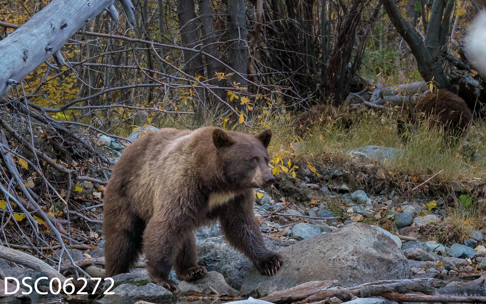 Just Bears-128.jpg