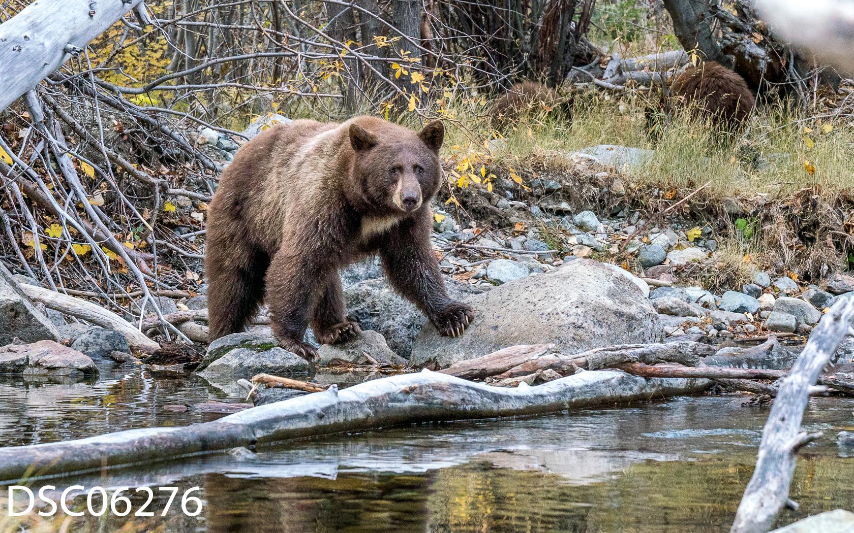 Just Bears-129.jpg