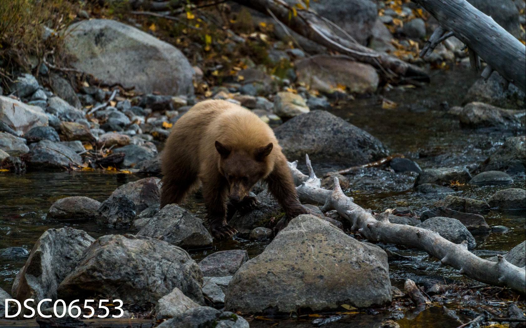 Just Bears-130.jpg