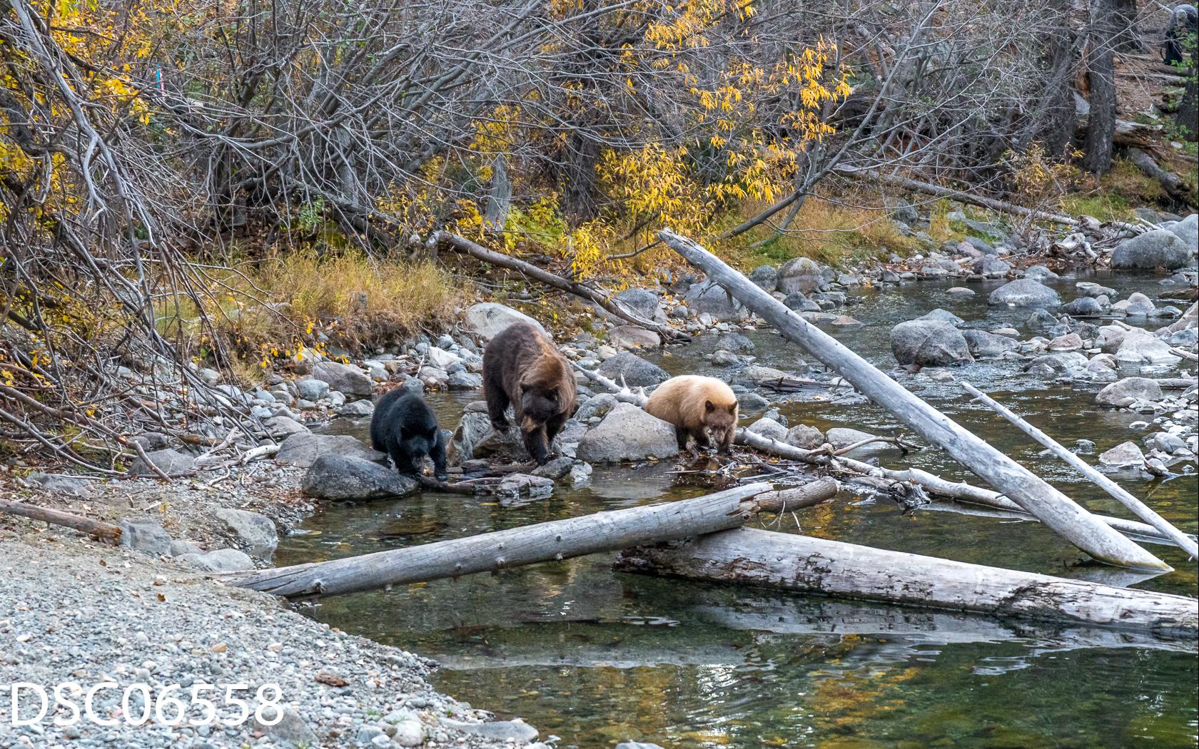 Just Bears-131.jpg