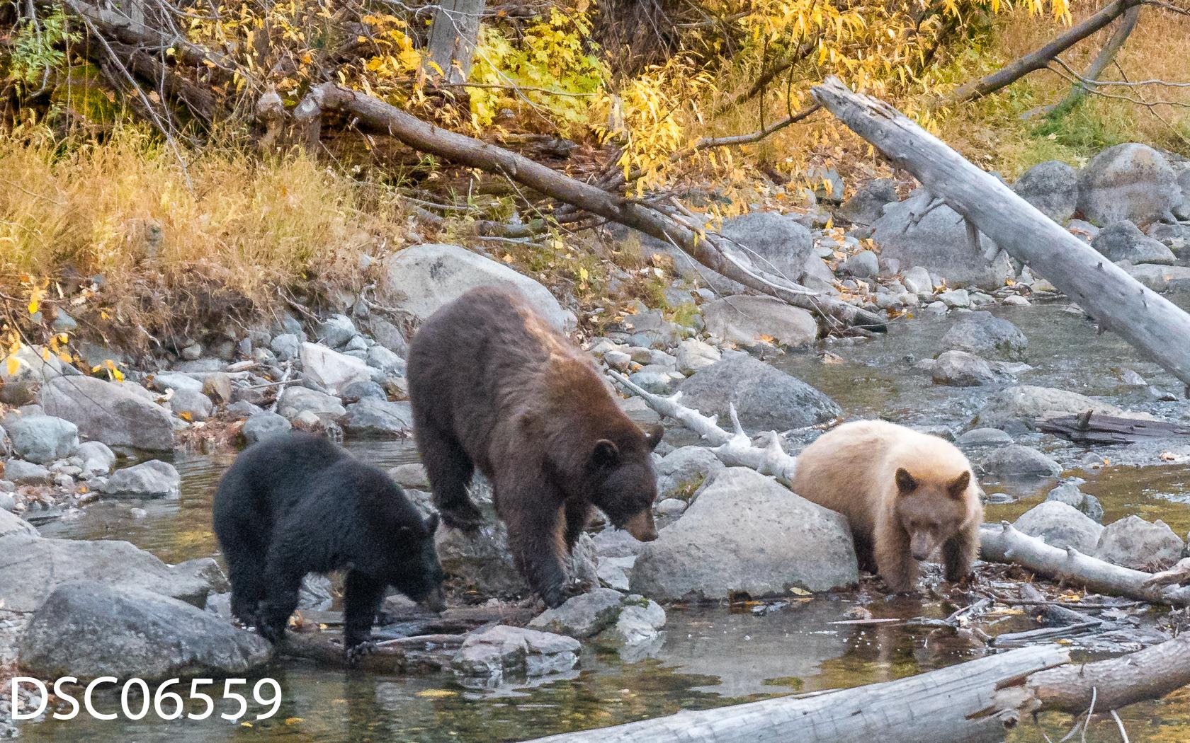 Just Bears-132.jpg