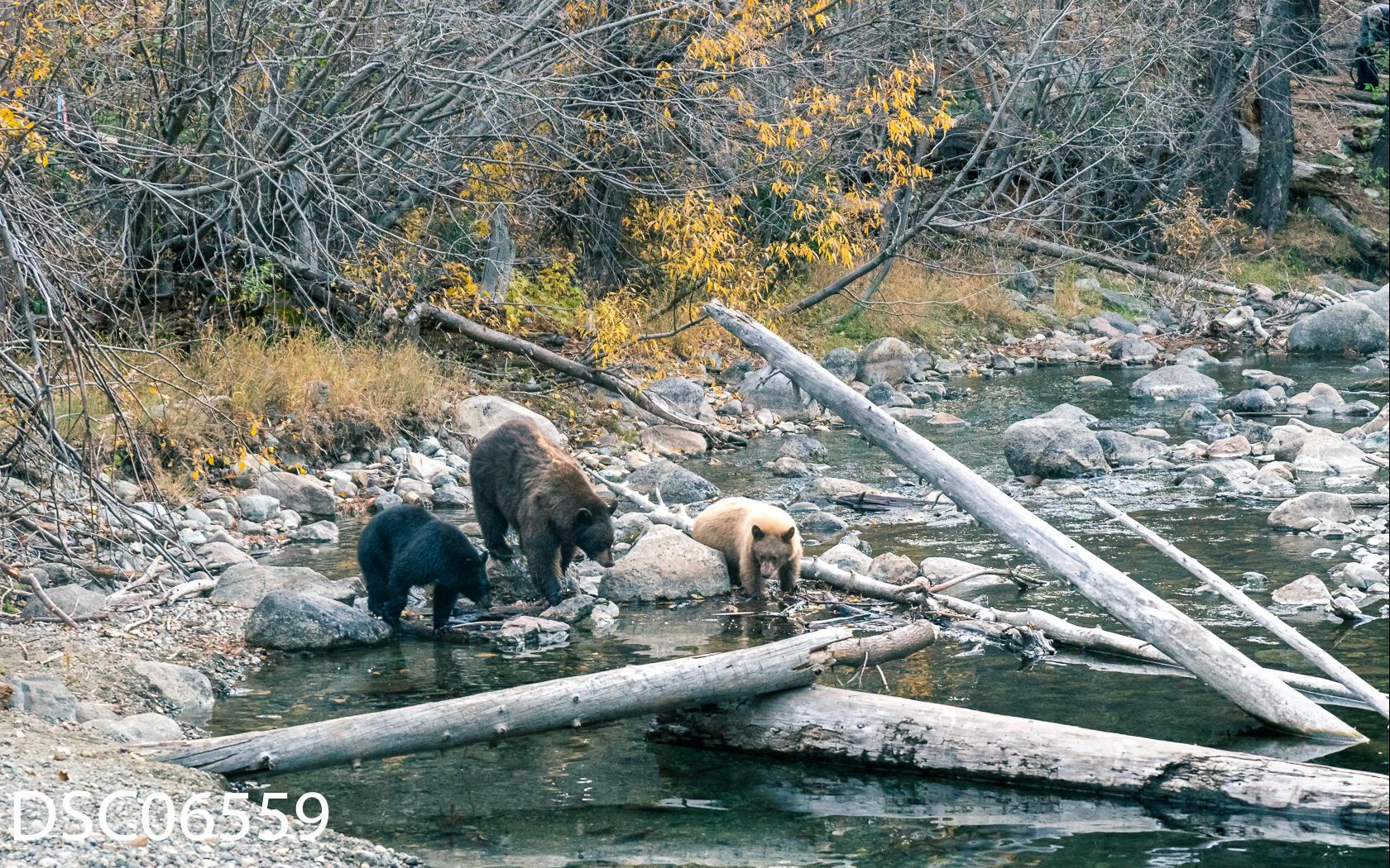 Just Bears-133.jpg