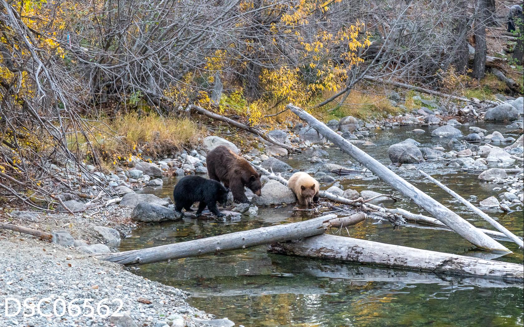 Just Bears-135.jpg
