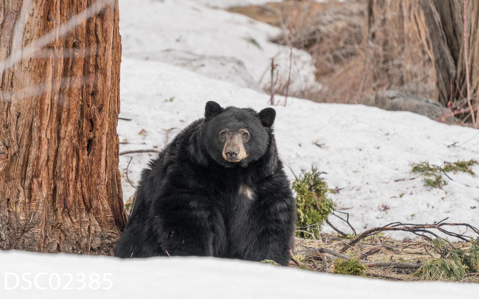 Just Bears-138.jpg