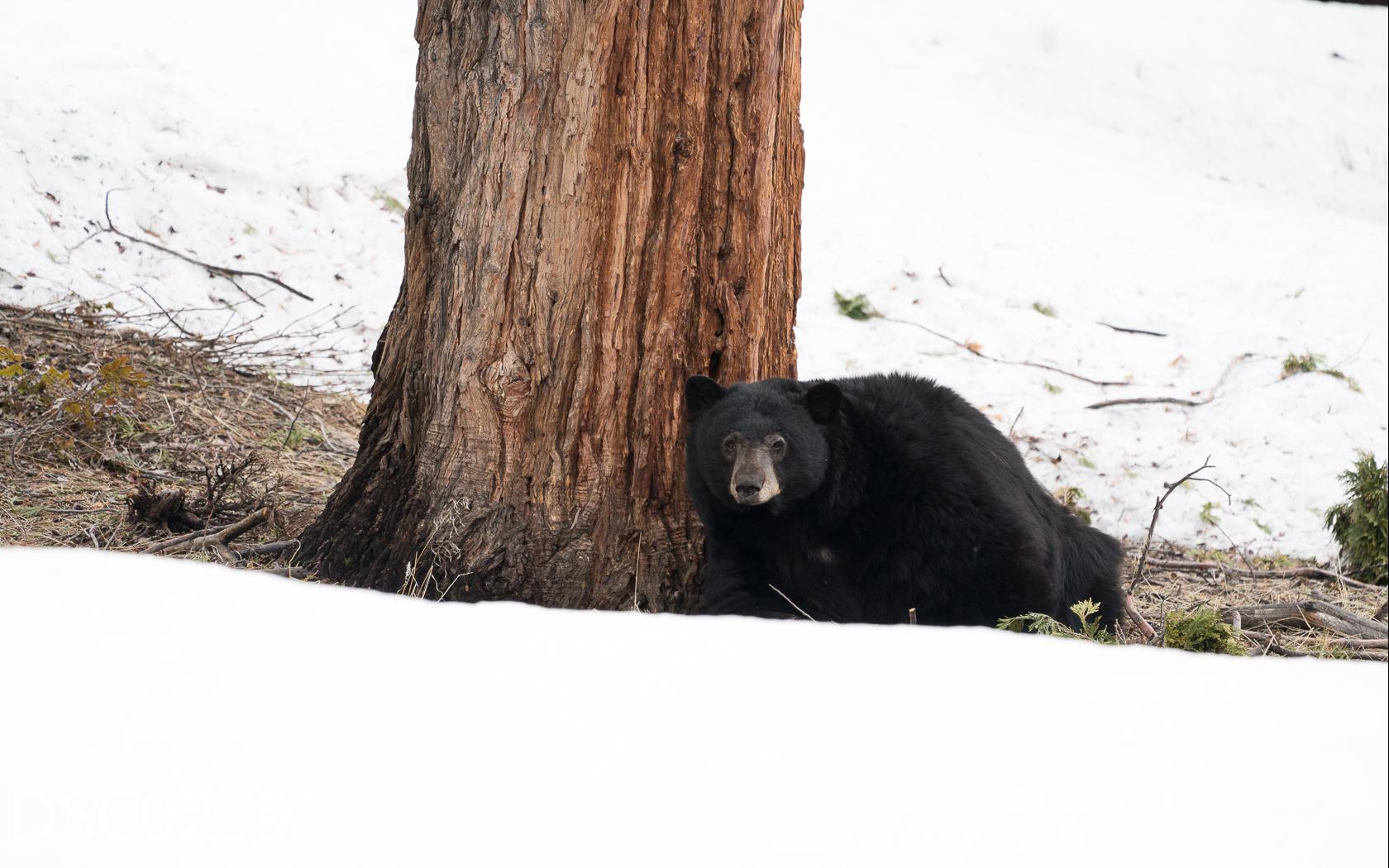 Just Bears-139.jpg