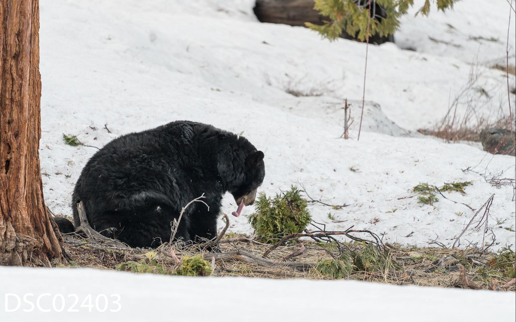 Just Bears-140.jpg