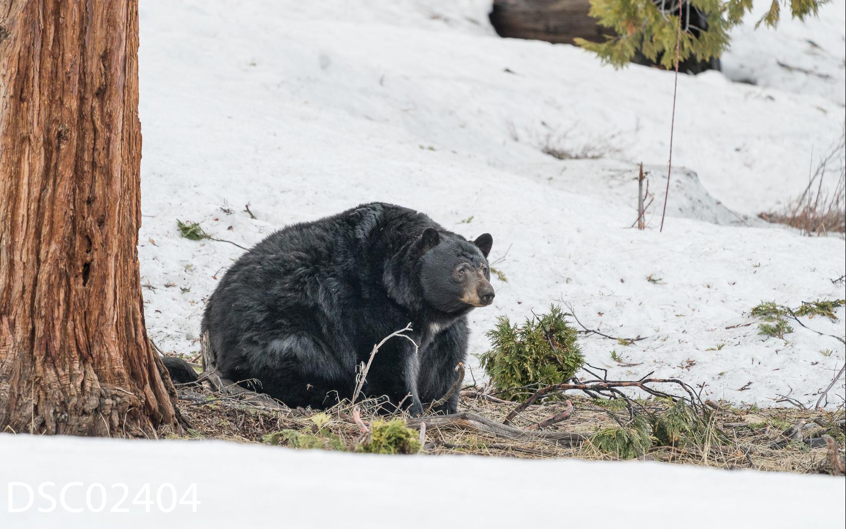 Just Bears-141.jpg