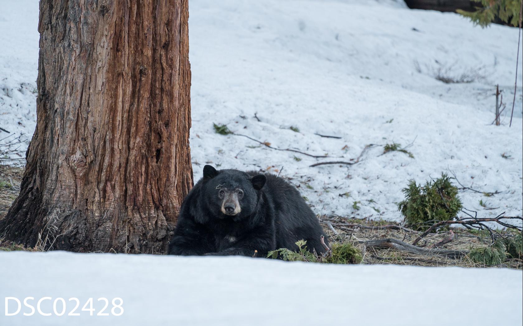 Just Bears-142.jpg