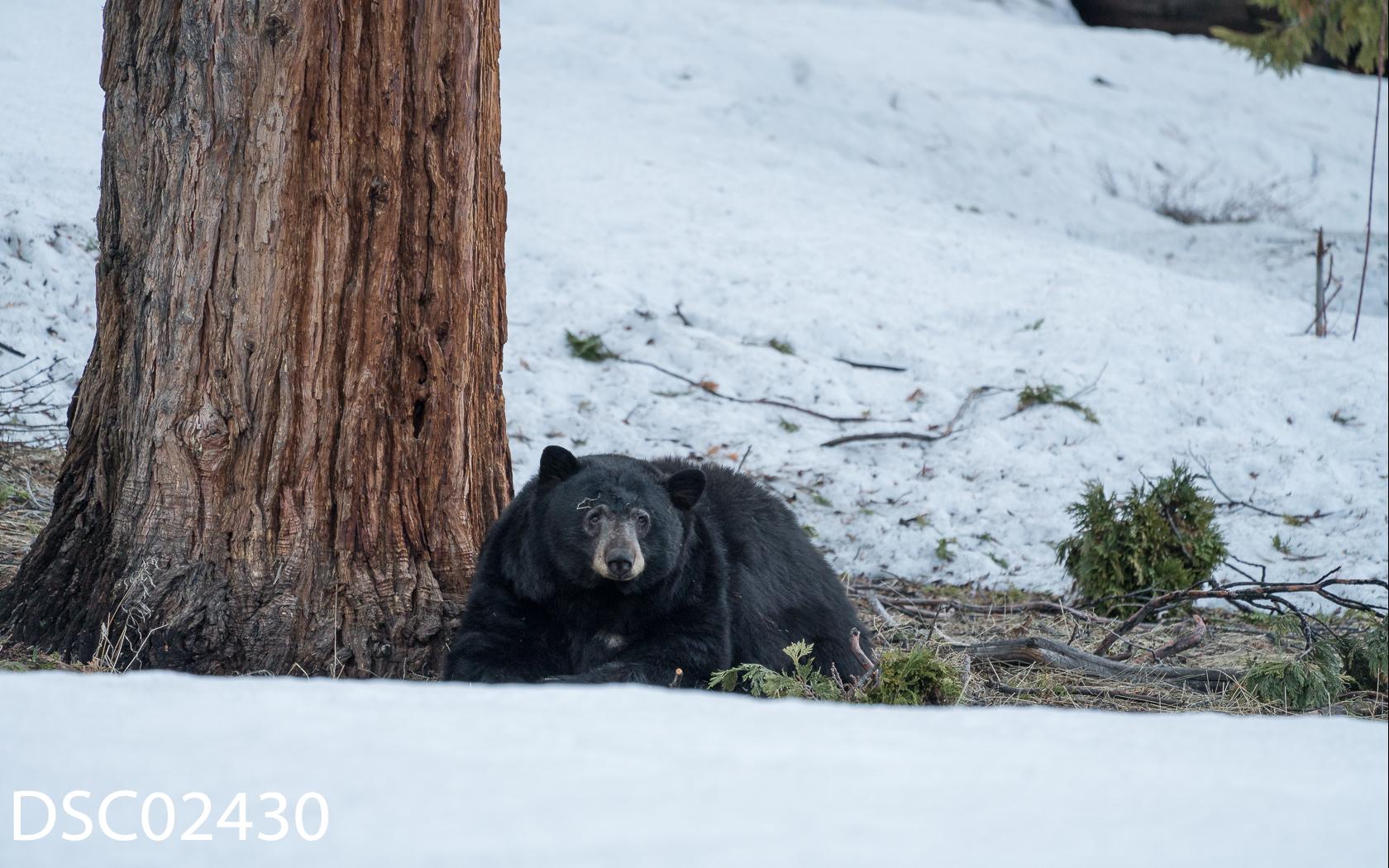 Just Bears-143.jpg