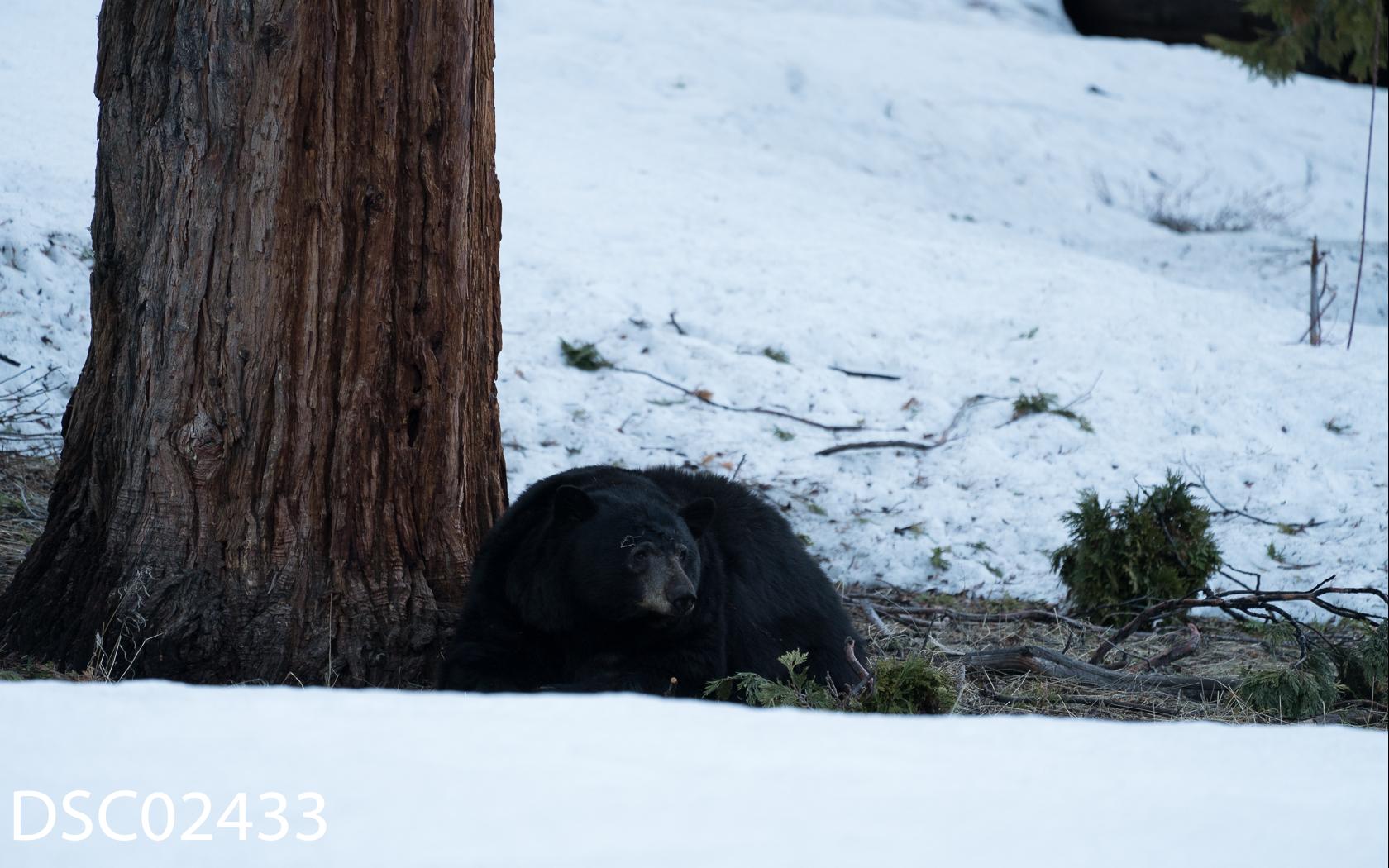 Just Bears-144.jpg