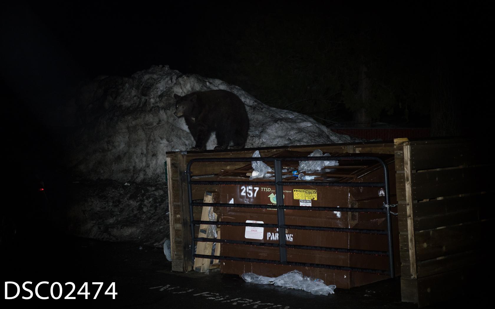 Just Bears-147.jpg