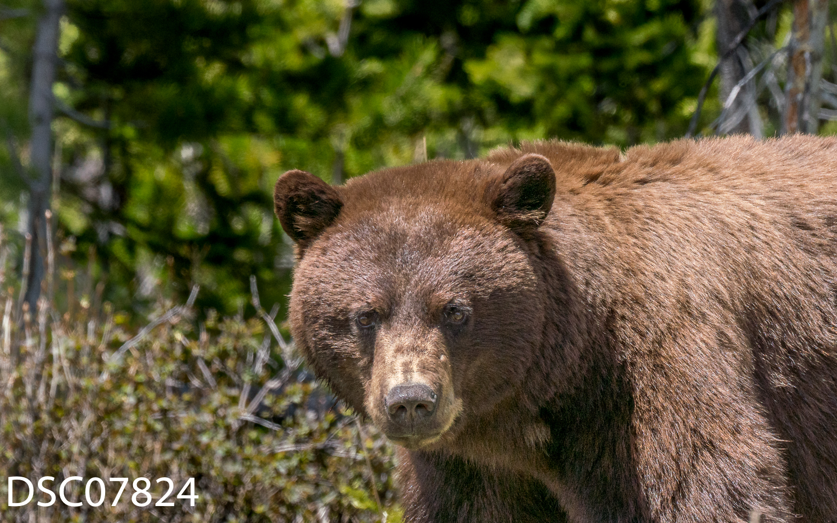 Just Bears-149.jpg