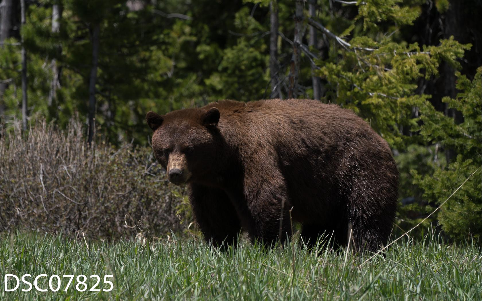 Just Bears-150.jpg