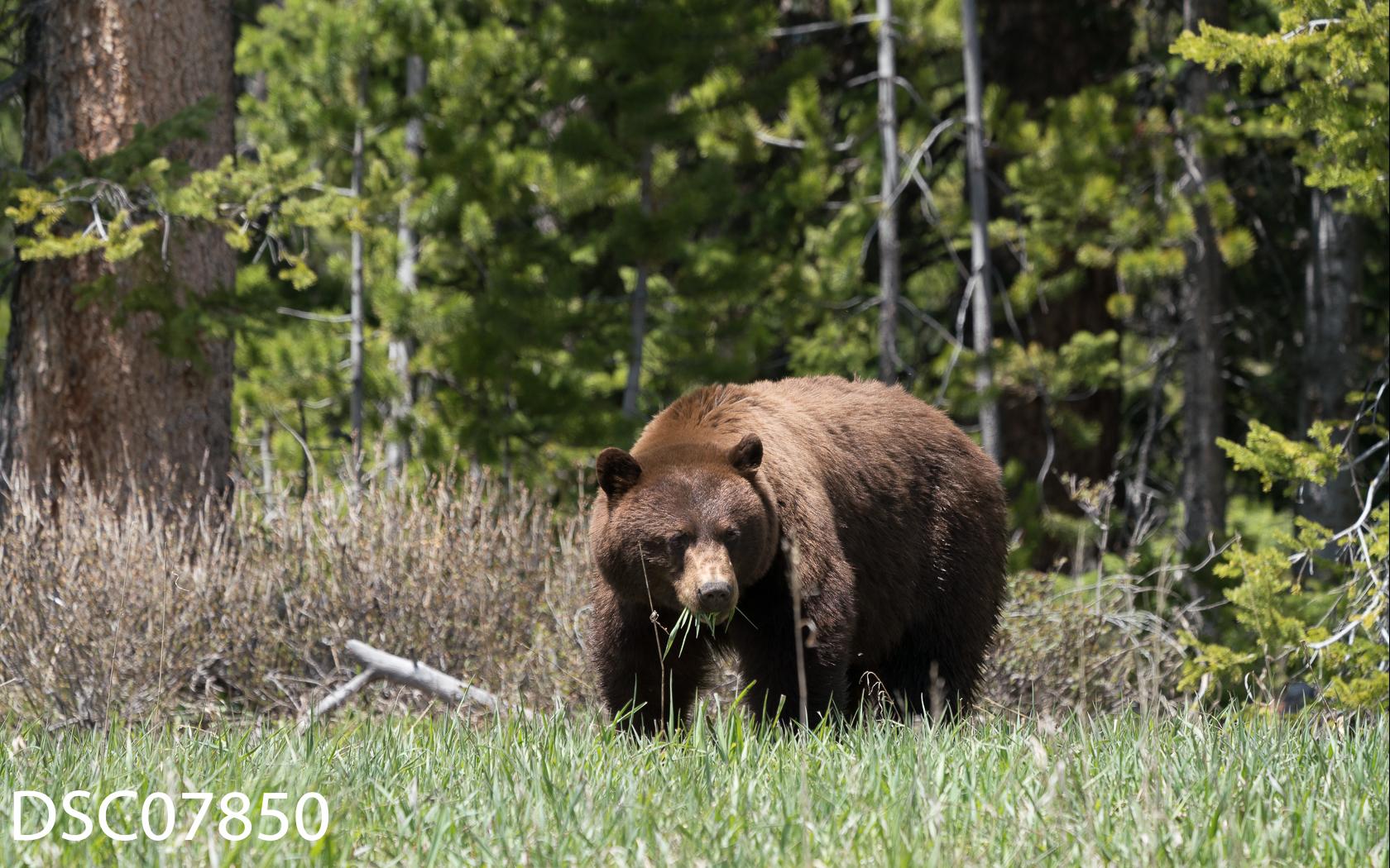 Just Bears-151.jpg