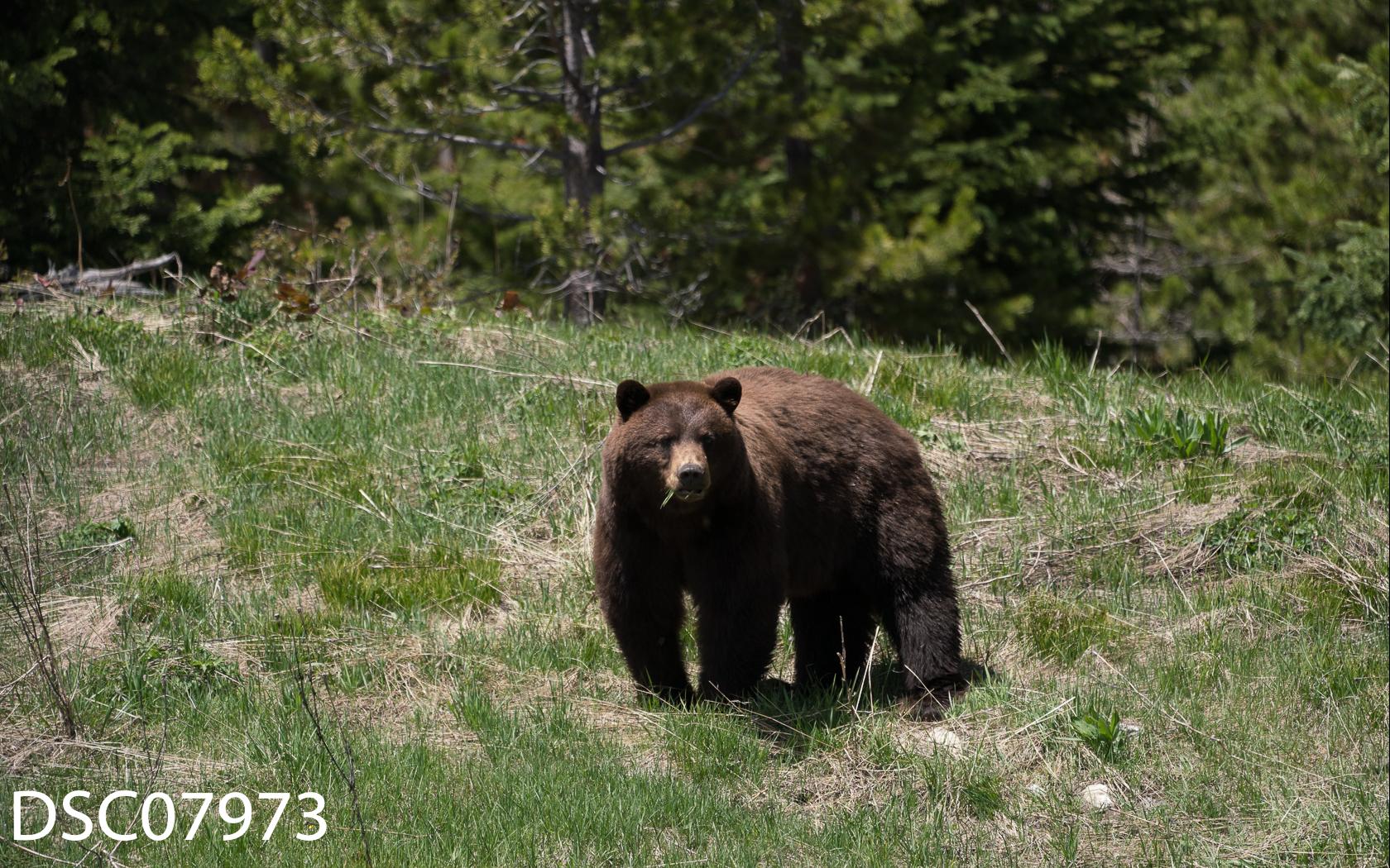 Just Bears-152.jpg