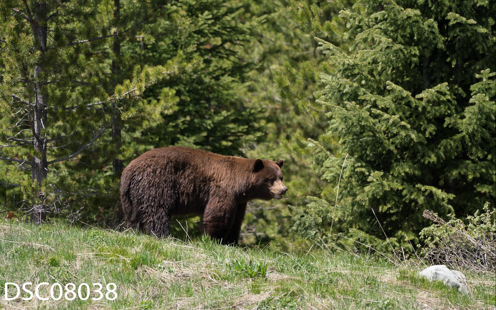 Just Bears-153.jpg