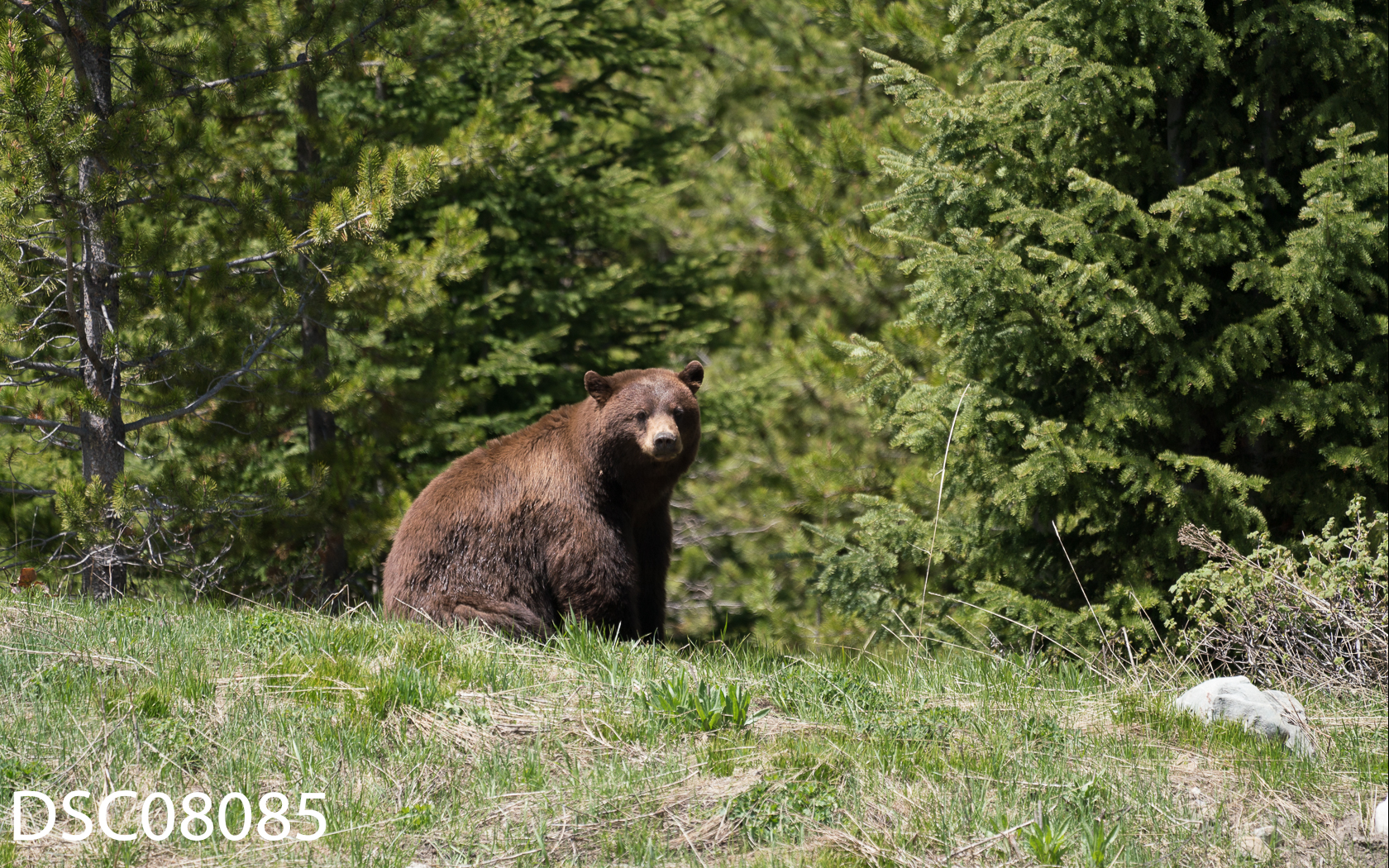 Just Bears-154.jpg