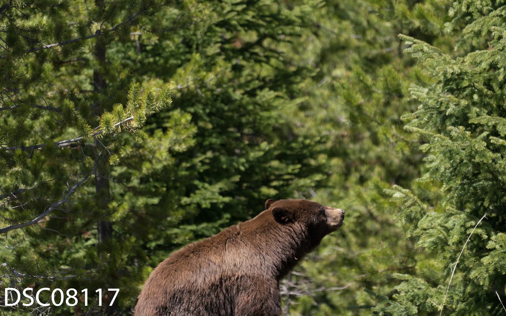 Just Bears-155.jpg