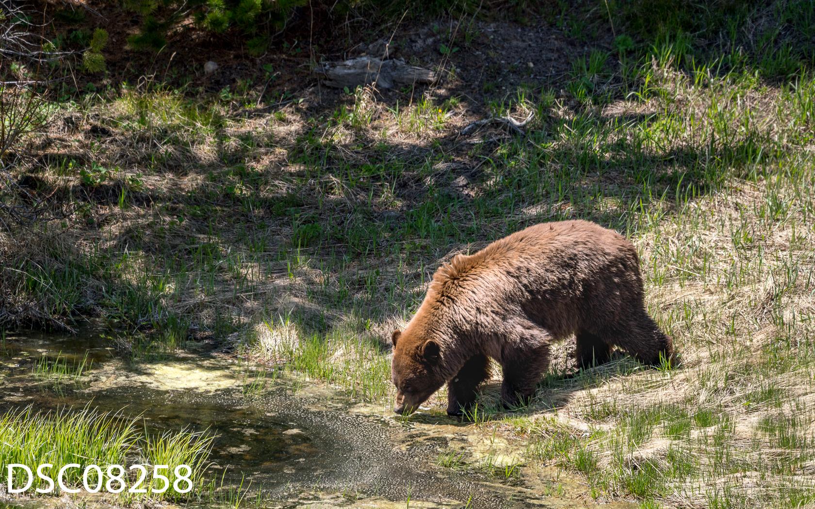 Just Bears-156.jpg