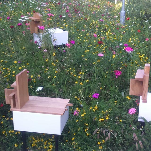My wandering flock is part of @holmfirthartweek in the wild flower garden of @devourdaily. Also featuring @rebeccaappleby7 @mickkirkbygeddes @garethgriffithsart #sheep #metal abstract #animal sculpture #outdoor sculpture