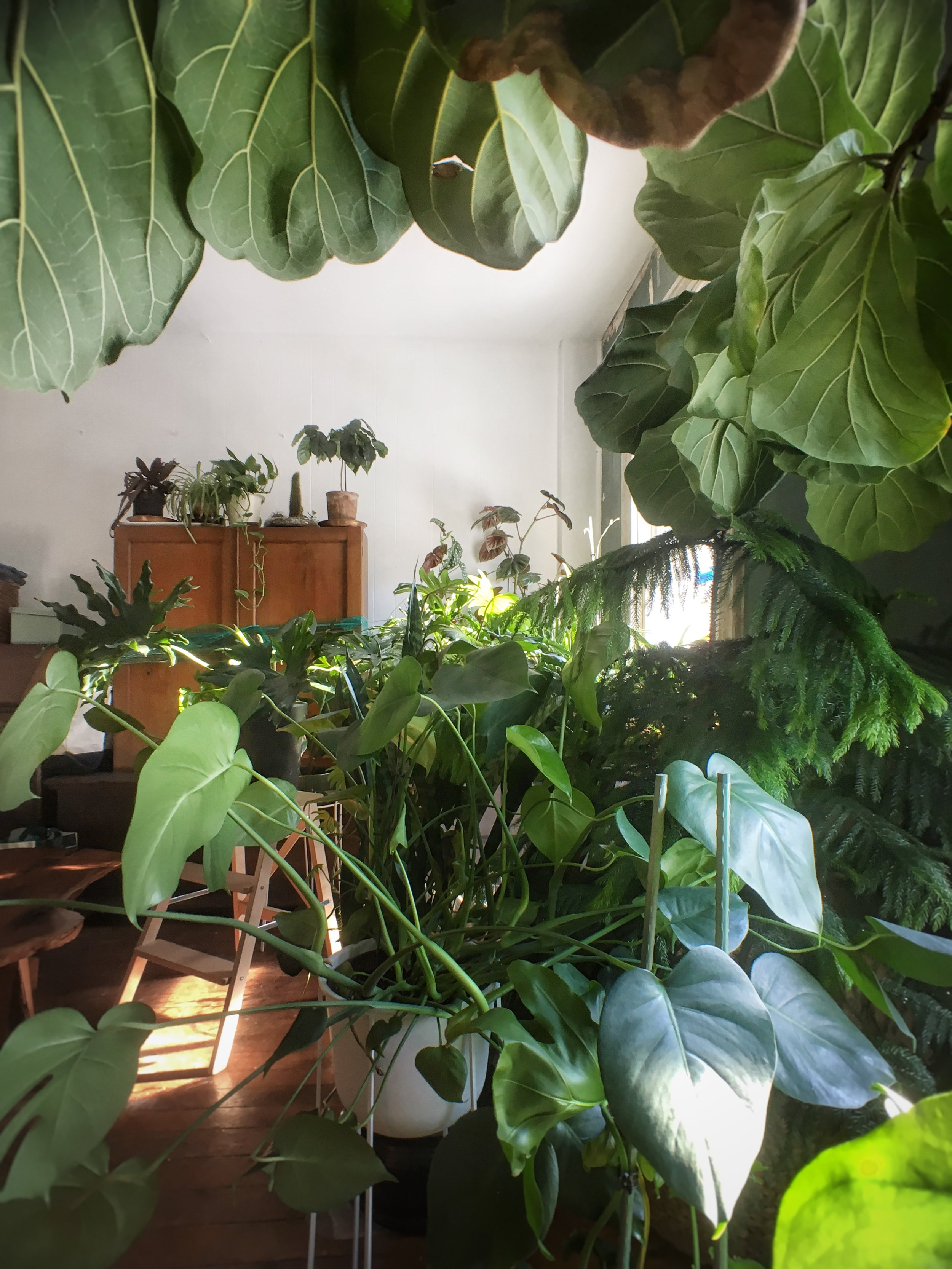 Our jungle-like situation will soon improve when we can spread out in the 2nd and 3rd floors.
