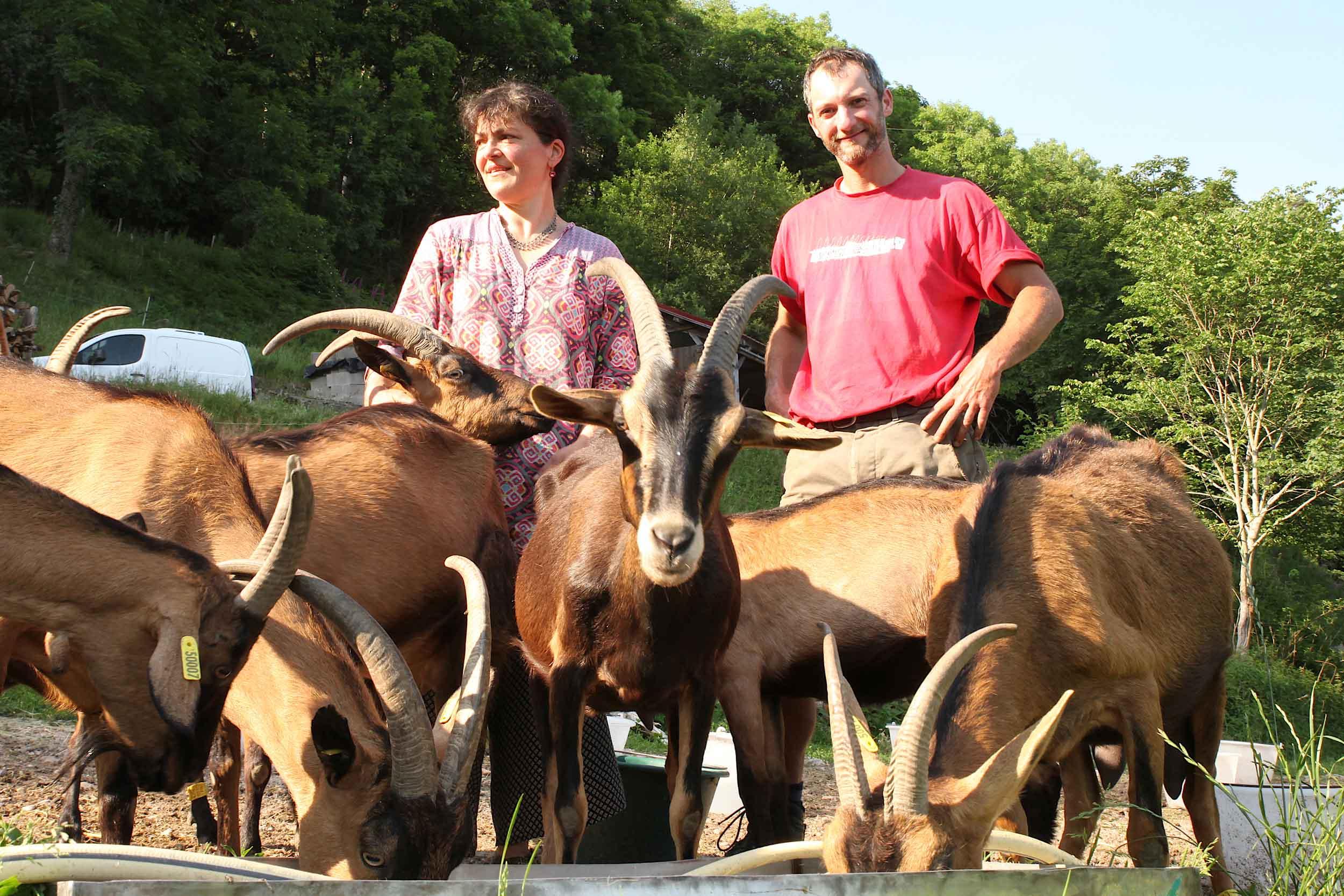 chevrerie du bambois 3.jpg