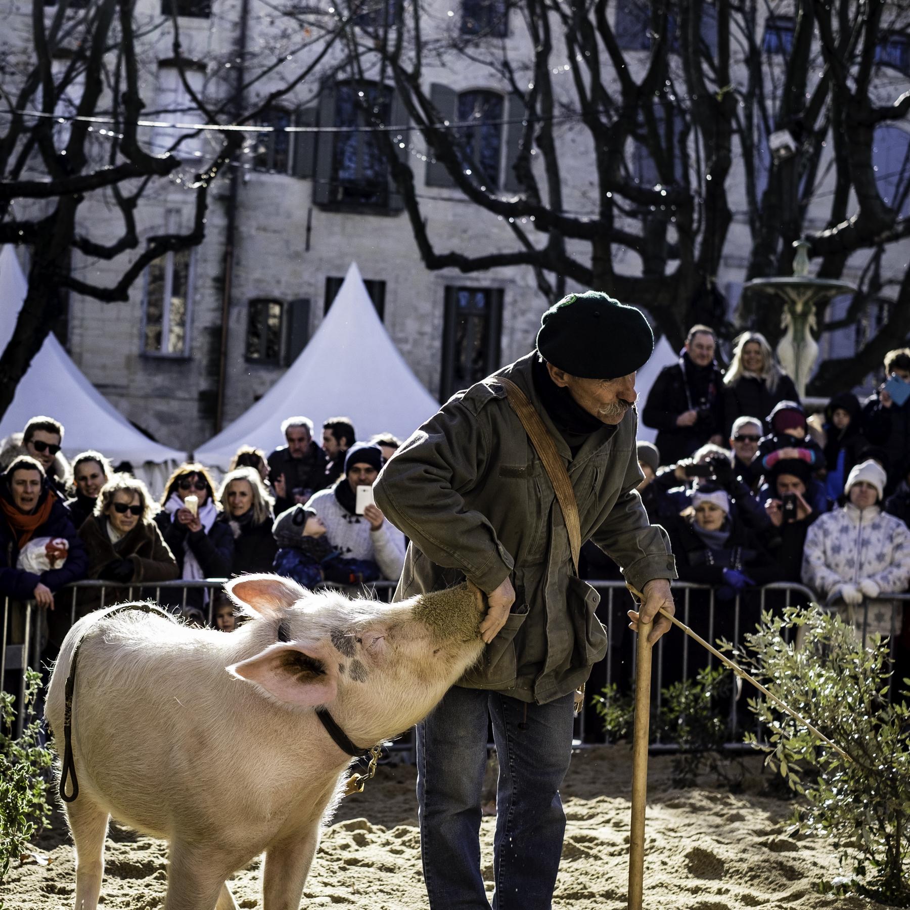 Truffle Hunter in Performance, Uzès