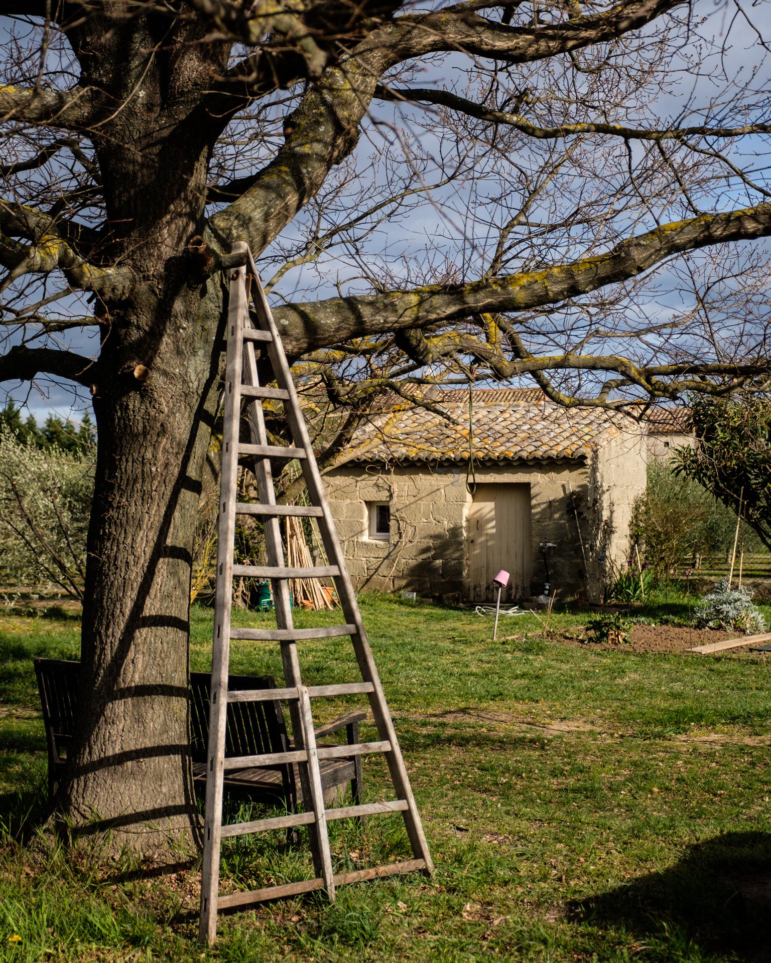 Garden Project - 4 - DSCF5792 copy.jpg