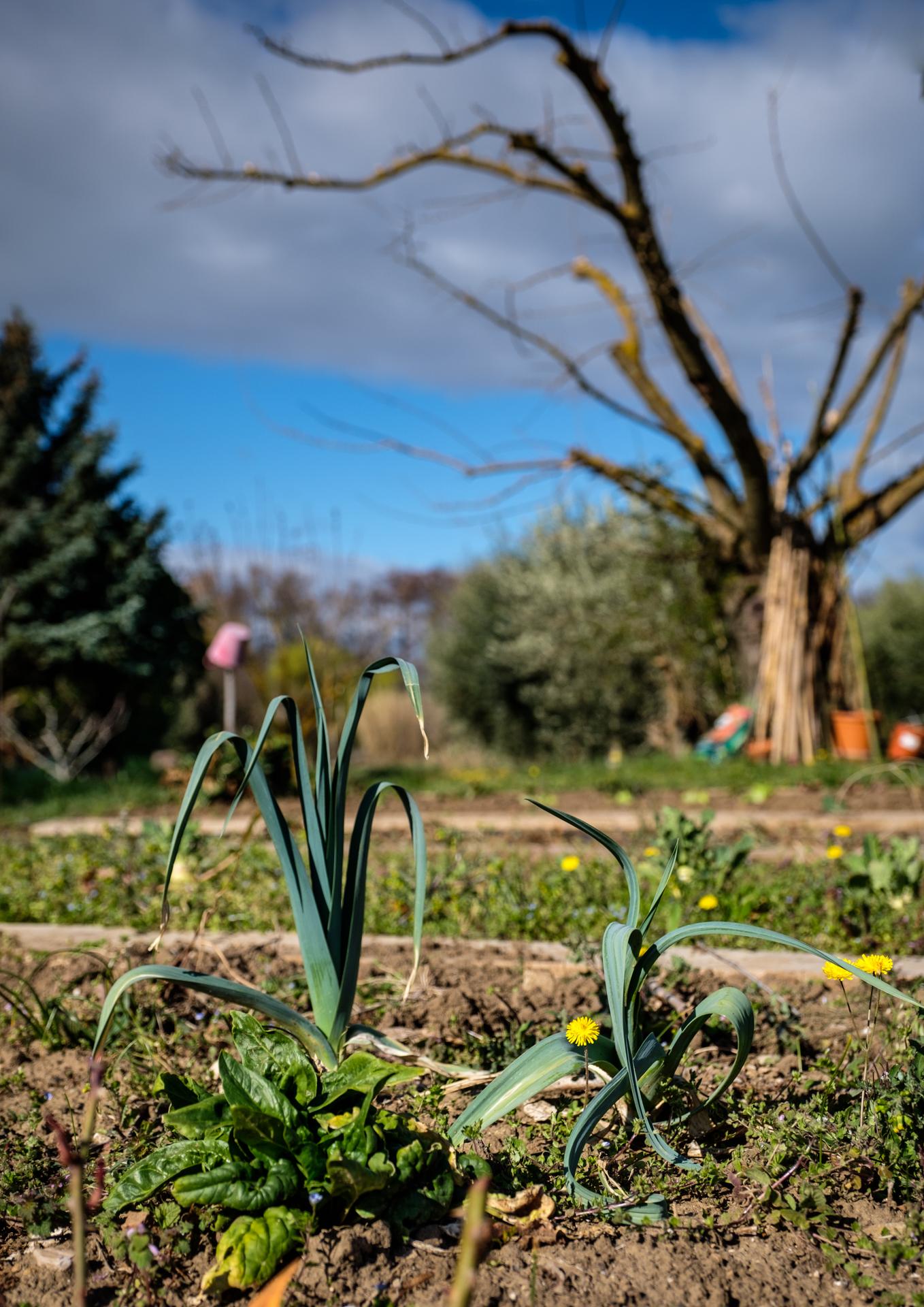 Garden Project - 9 - DSCF5853 copy.jpg