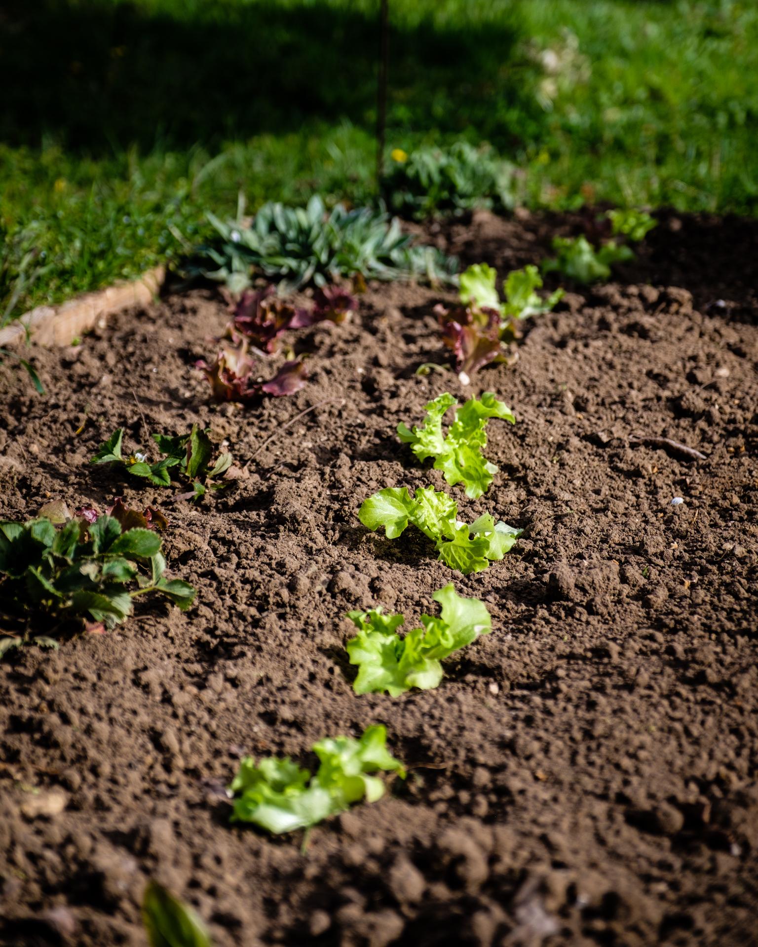 Garden Project - 12 - DSCF5811 copy.jpg