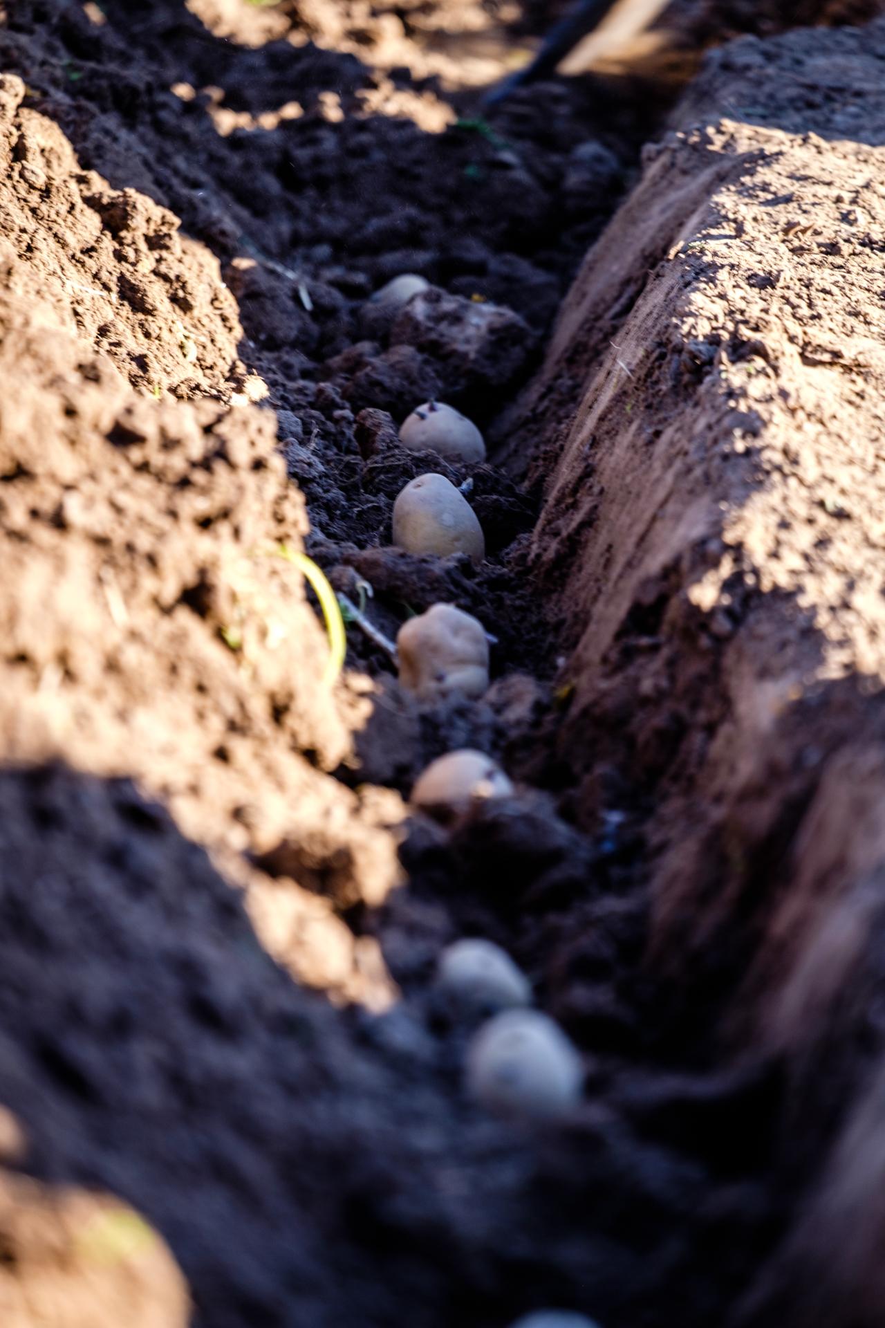 Garden Project - 15 - DSCF9931 copy.jpg