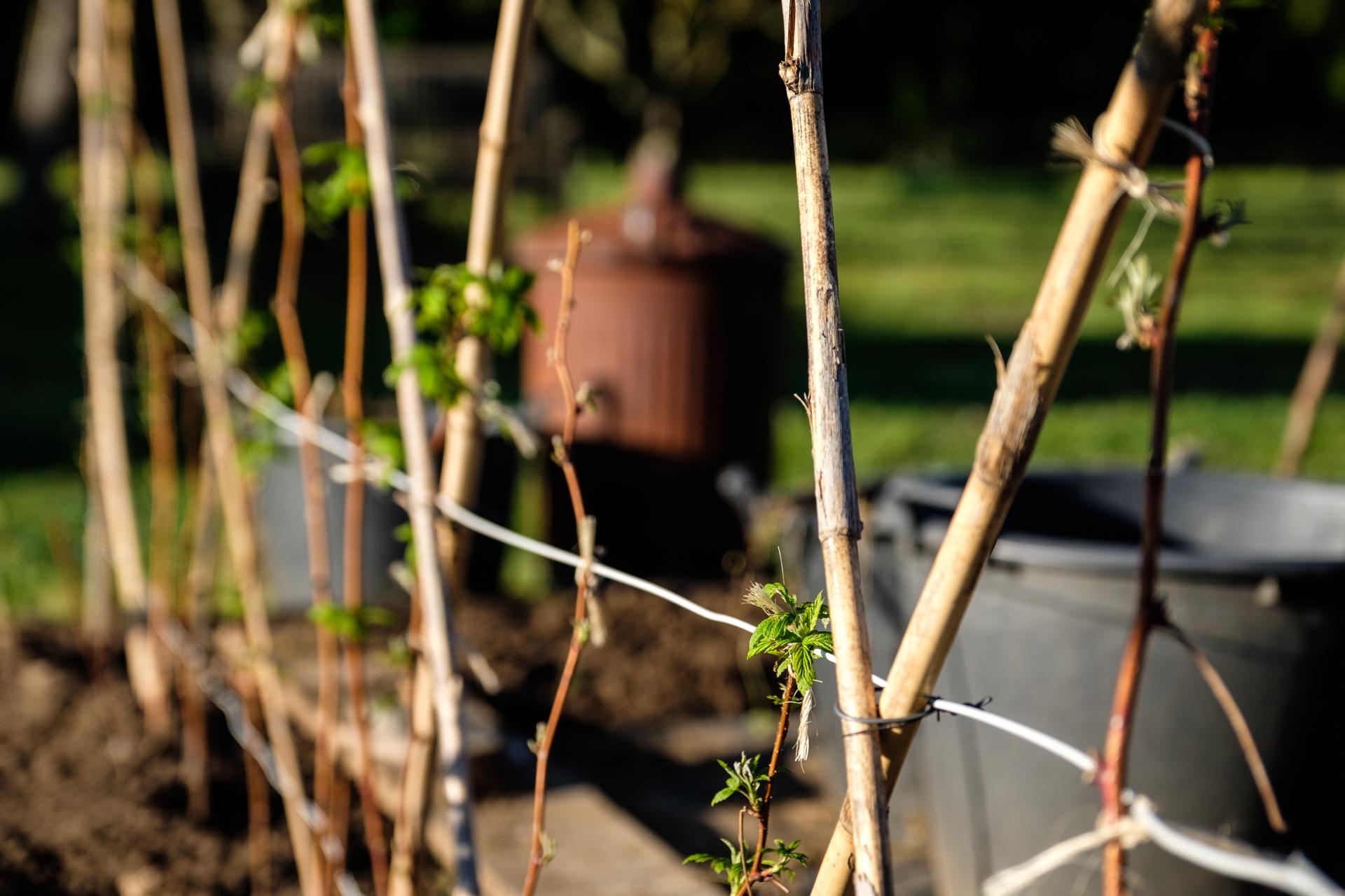 Garden Project - 63 - DSCF6207 copy.jpg