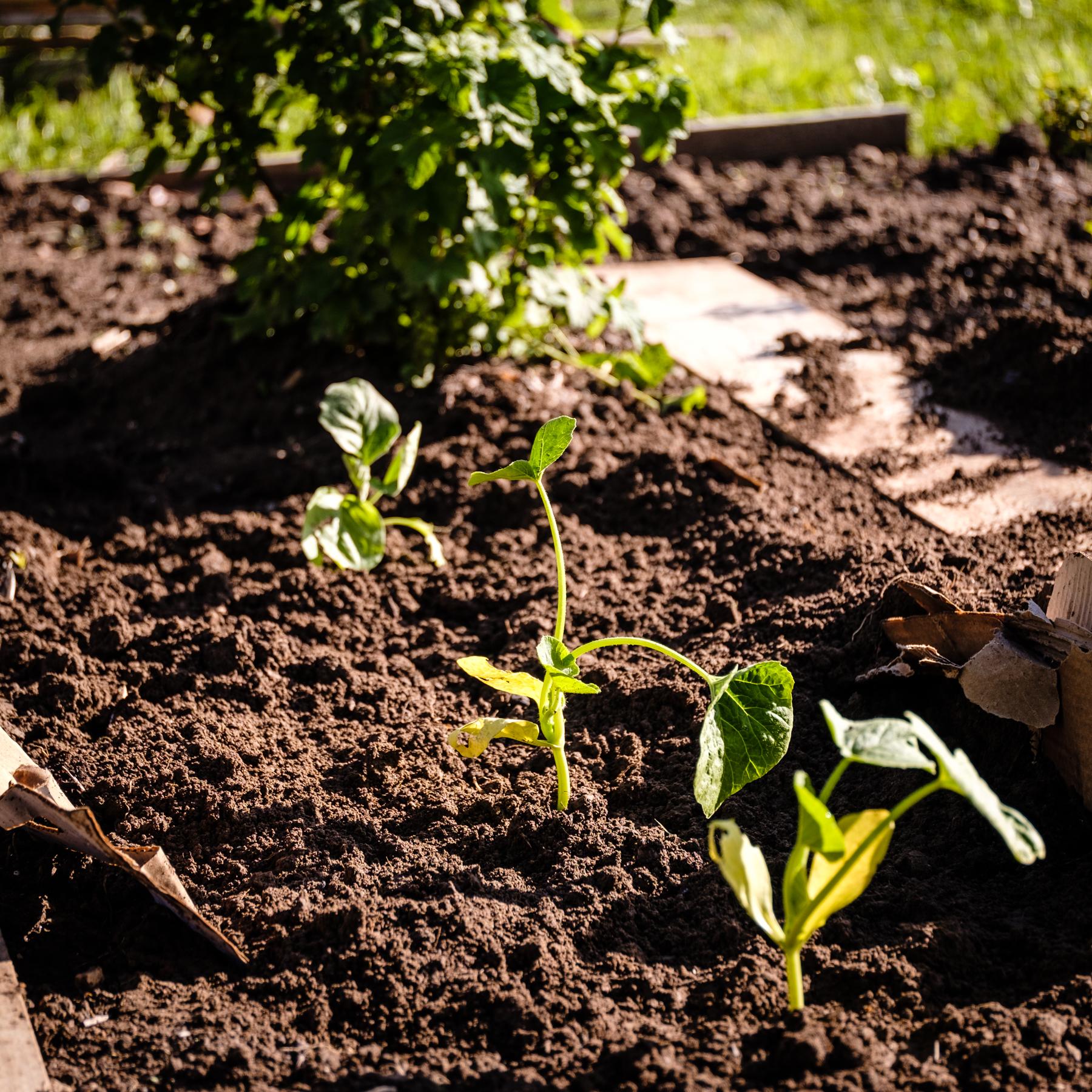 Garden Project - 131 - DSCF6773 copy.jpg