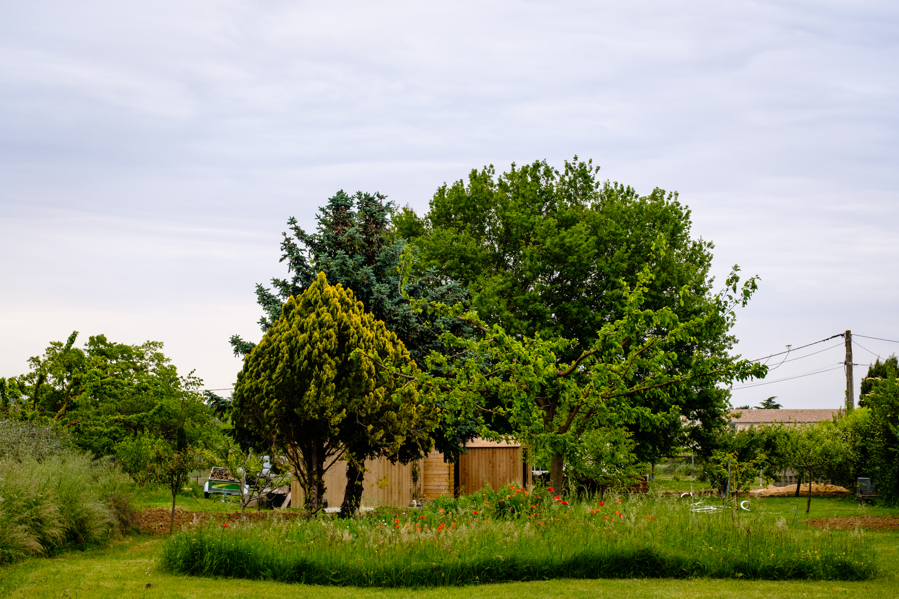 Garden Project - 154 - DSCF7056 copy.jpg