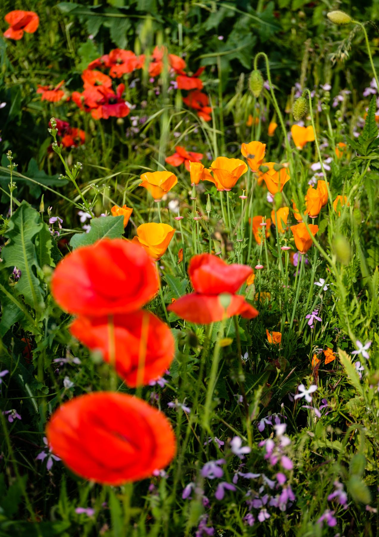 Garden Project - 182 - DSCF7292 copy.jpg