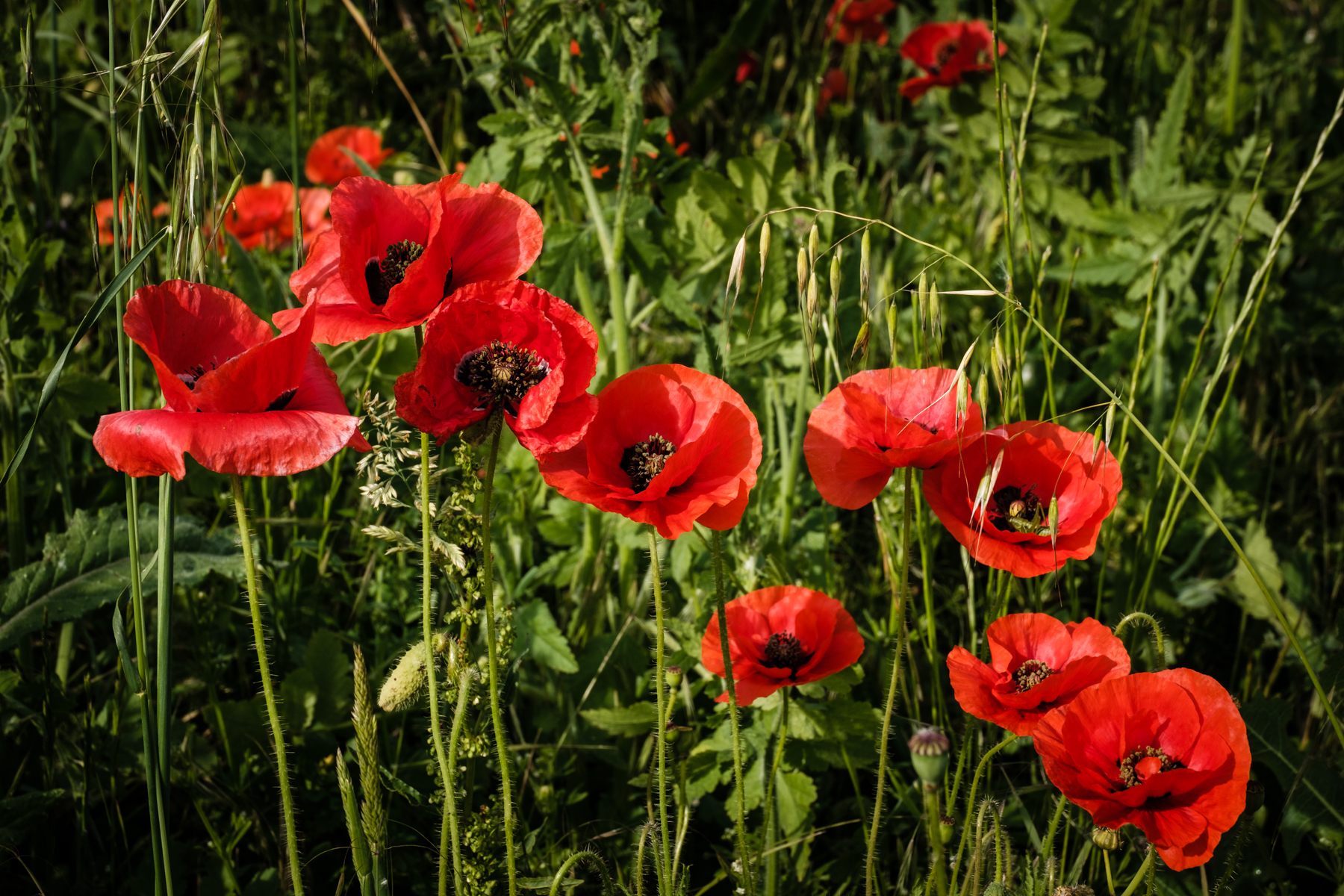 Garden Project - 176 - DSCF7319 copy.jpg