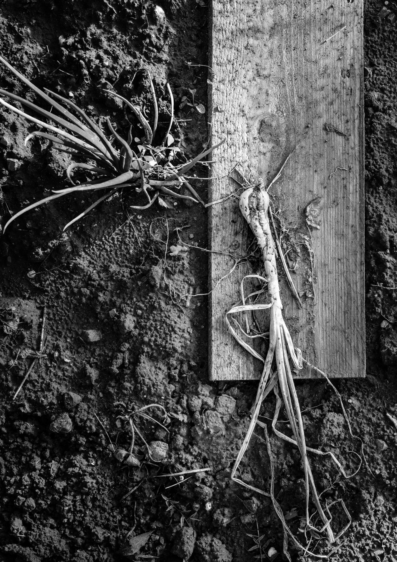 Garden Project - 261 - DSCF8193 copy.jpg